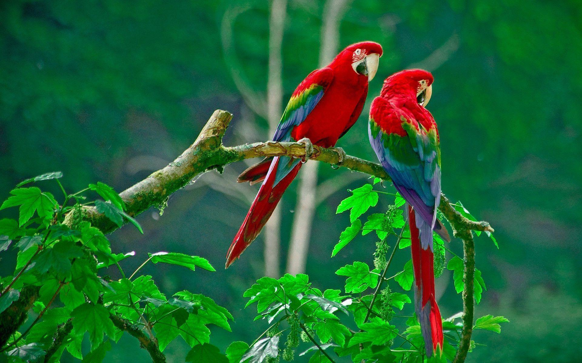 Wallpaper Gallery Love Bird Wallpaper: Wallpapers Love Birds