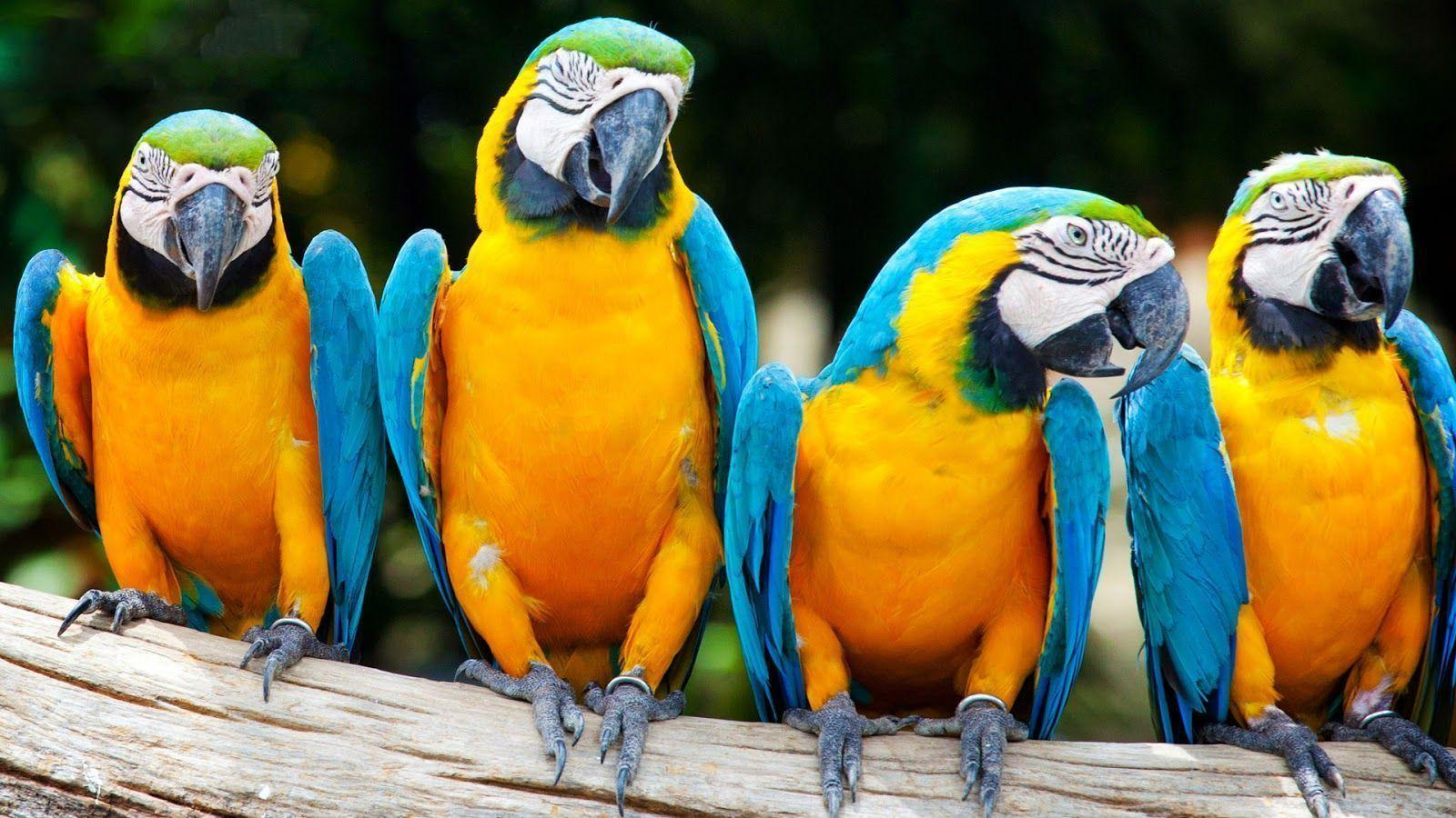Animals For > Blue And Gold Macaw Wallpaper