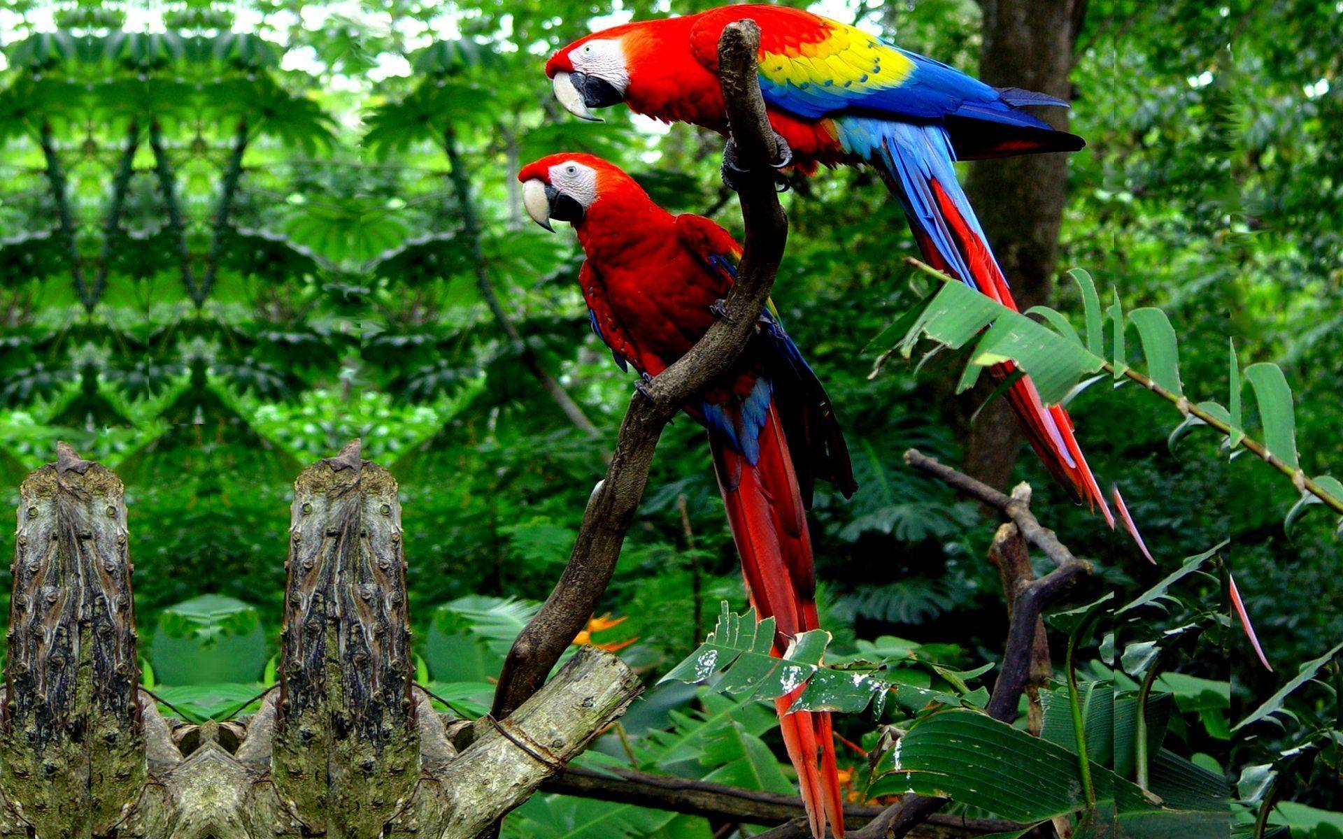 Colorful Winged Macaw Parrots Widescreen Wallpapers Free Download