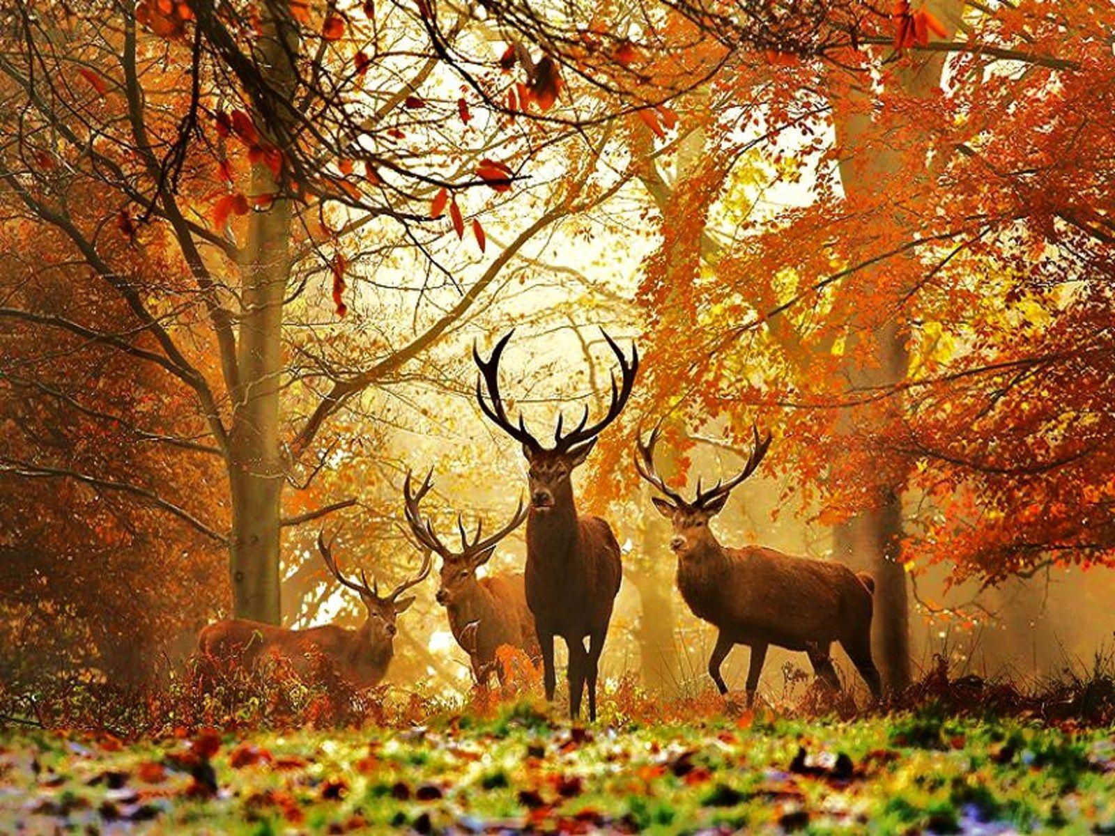hunting grounds hd wallpaper - photo #20