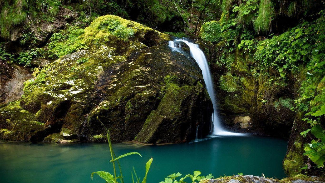 Rain Forest Wallpapers - Wallpaper Cave