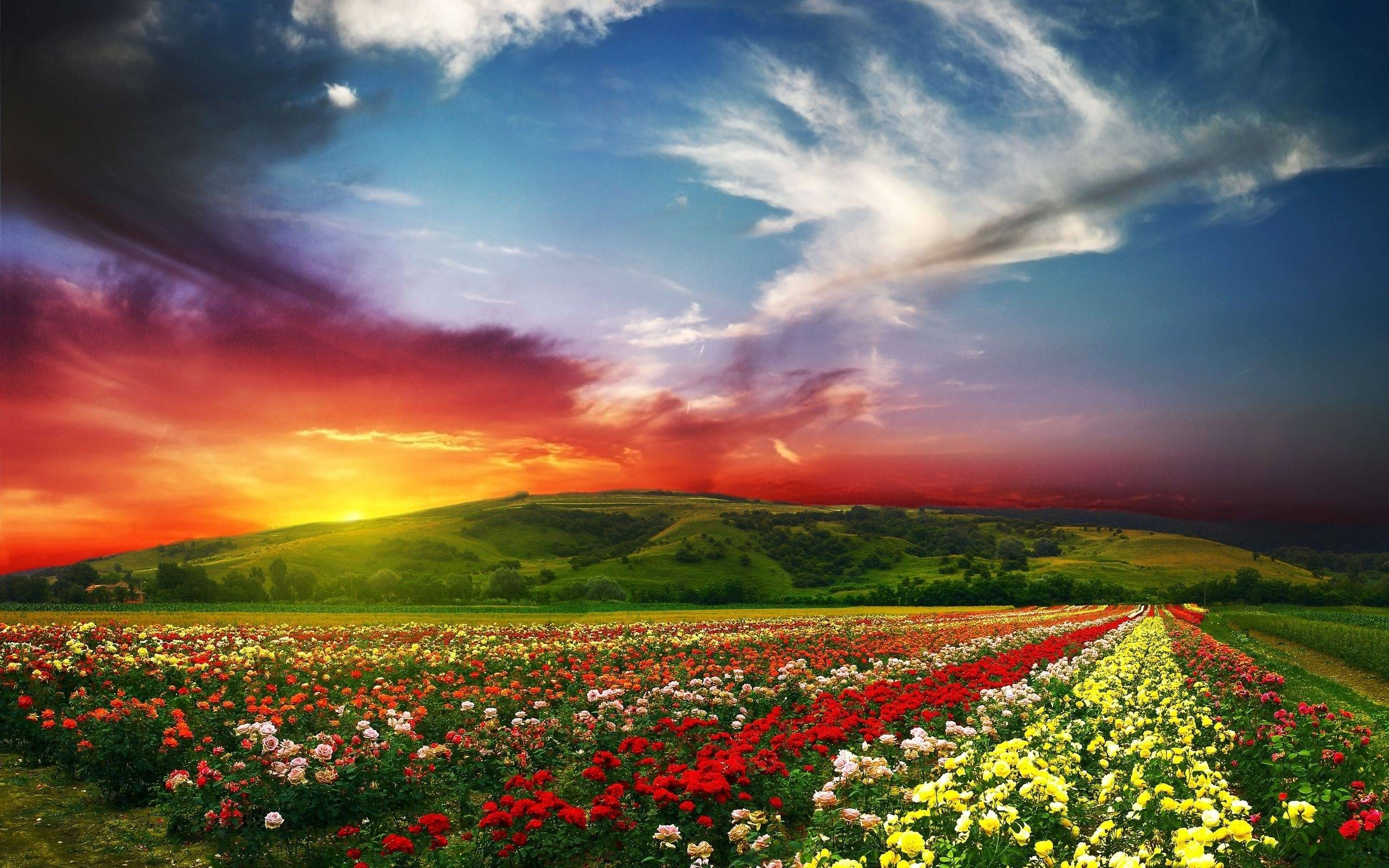 Image result for best hd nature wallpapers