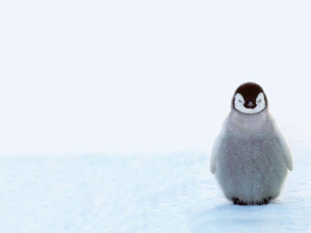 Cute penguin - photo#7
