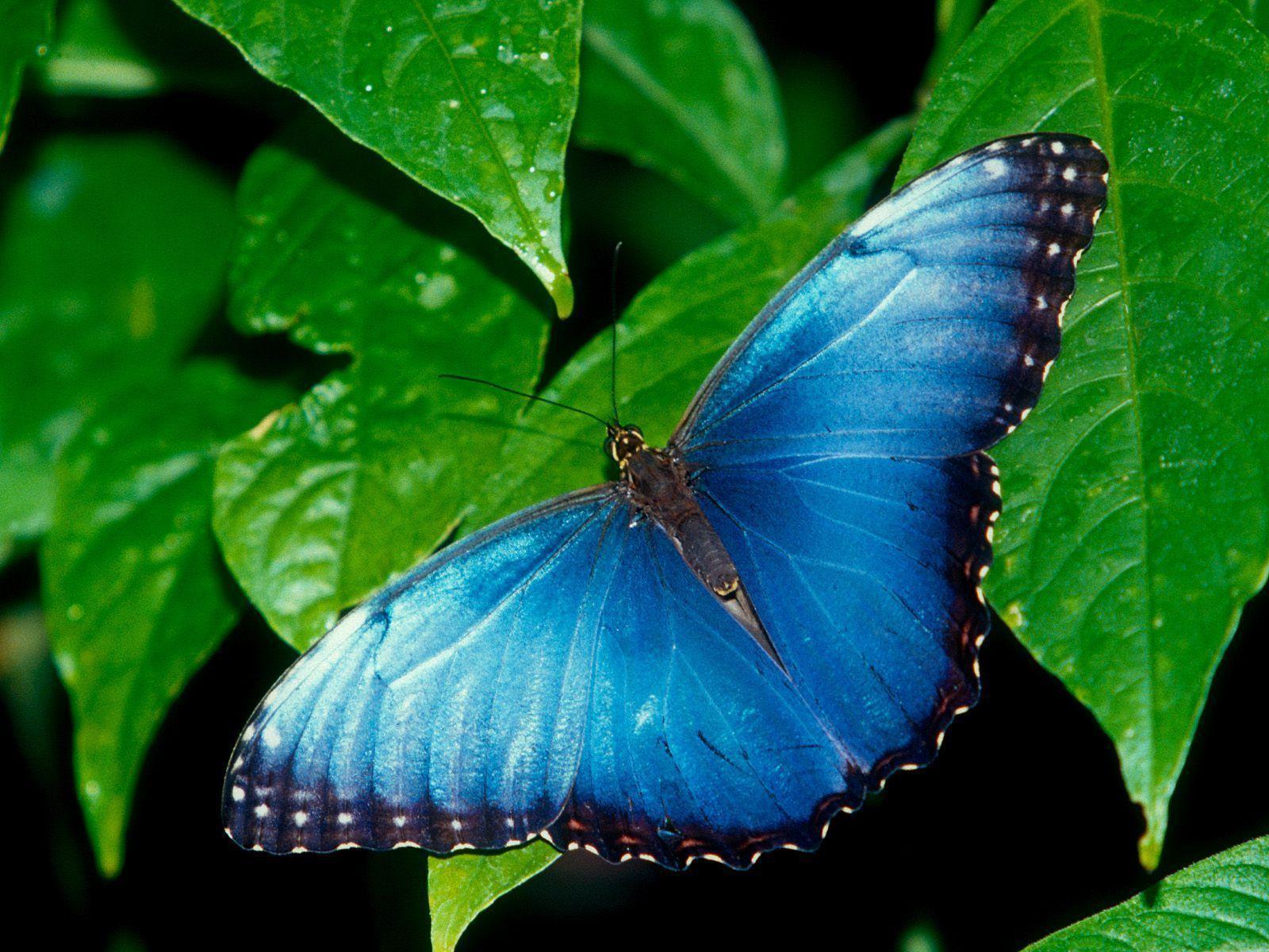 Butterfly Desktop Wallpaper | Butterfly Desktop Images | New ...