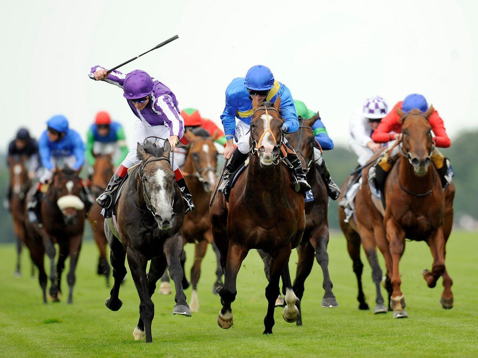 Animals For > Horse Racing Wallpaper