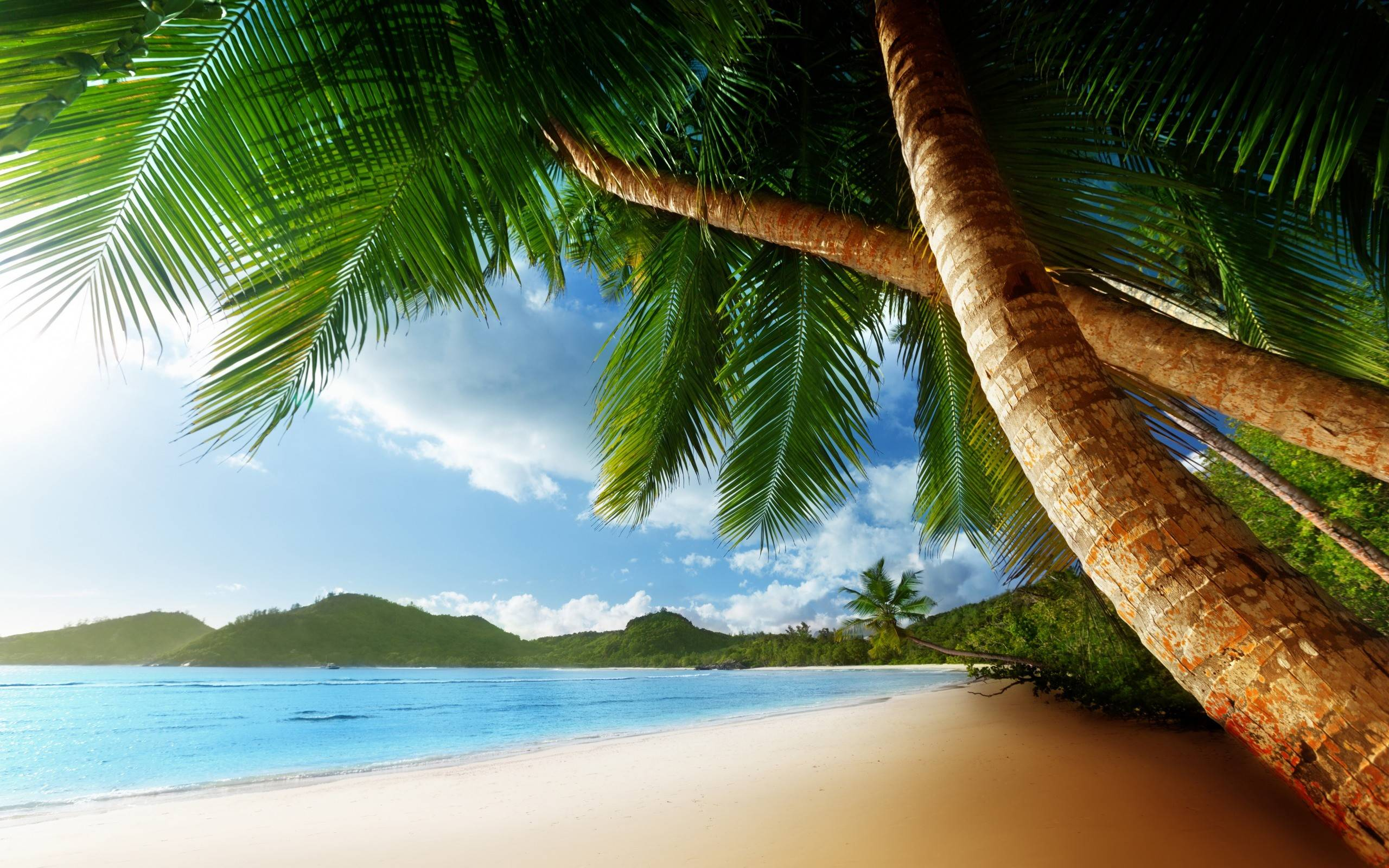Beach With Palm Trees Hd Images 3 Wallpapers