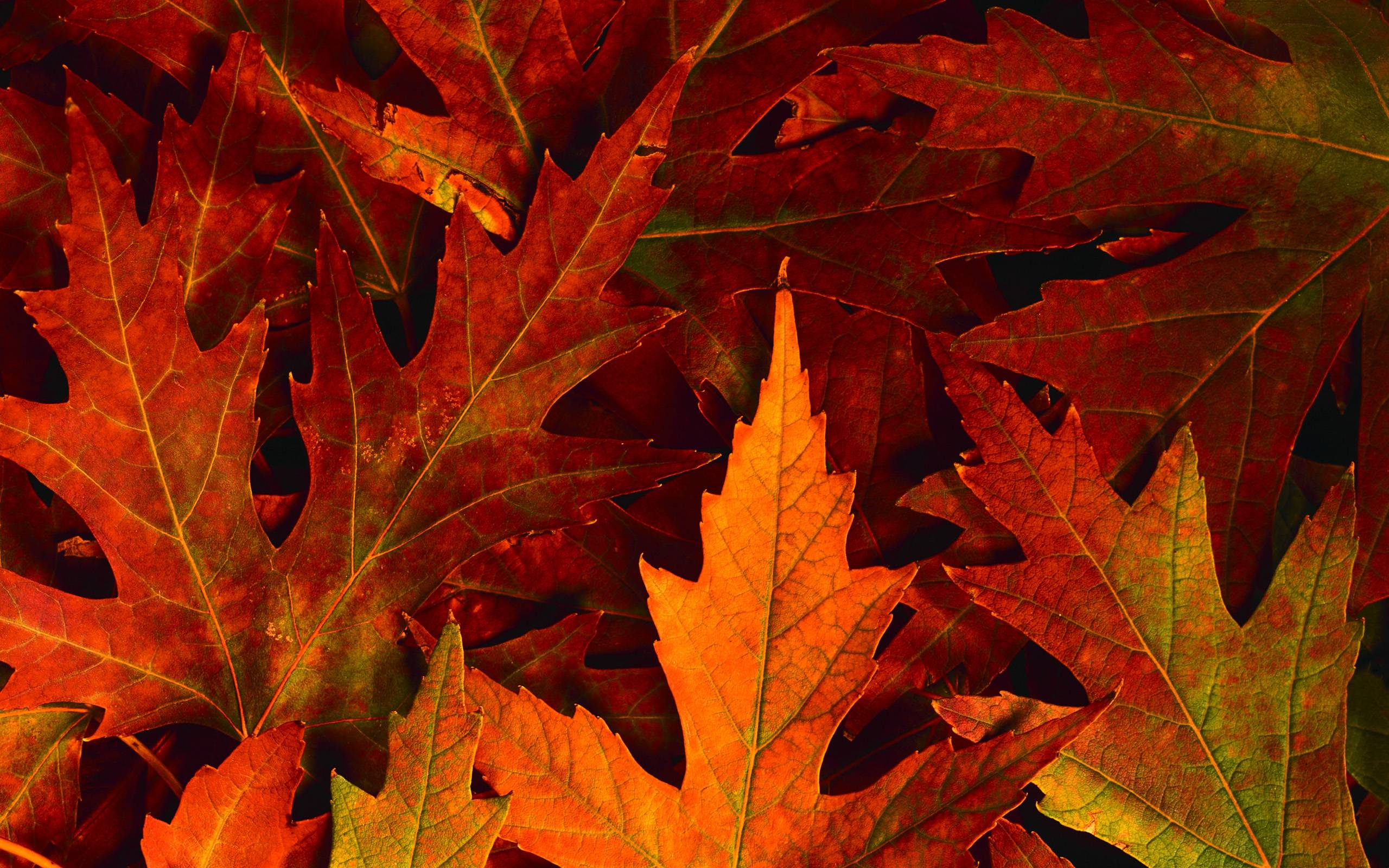 fall leaves desktop backgrounds wallpaper cave