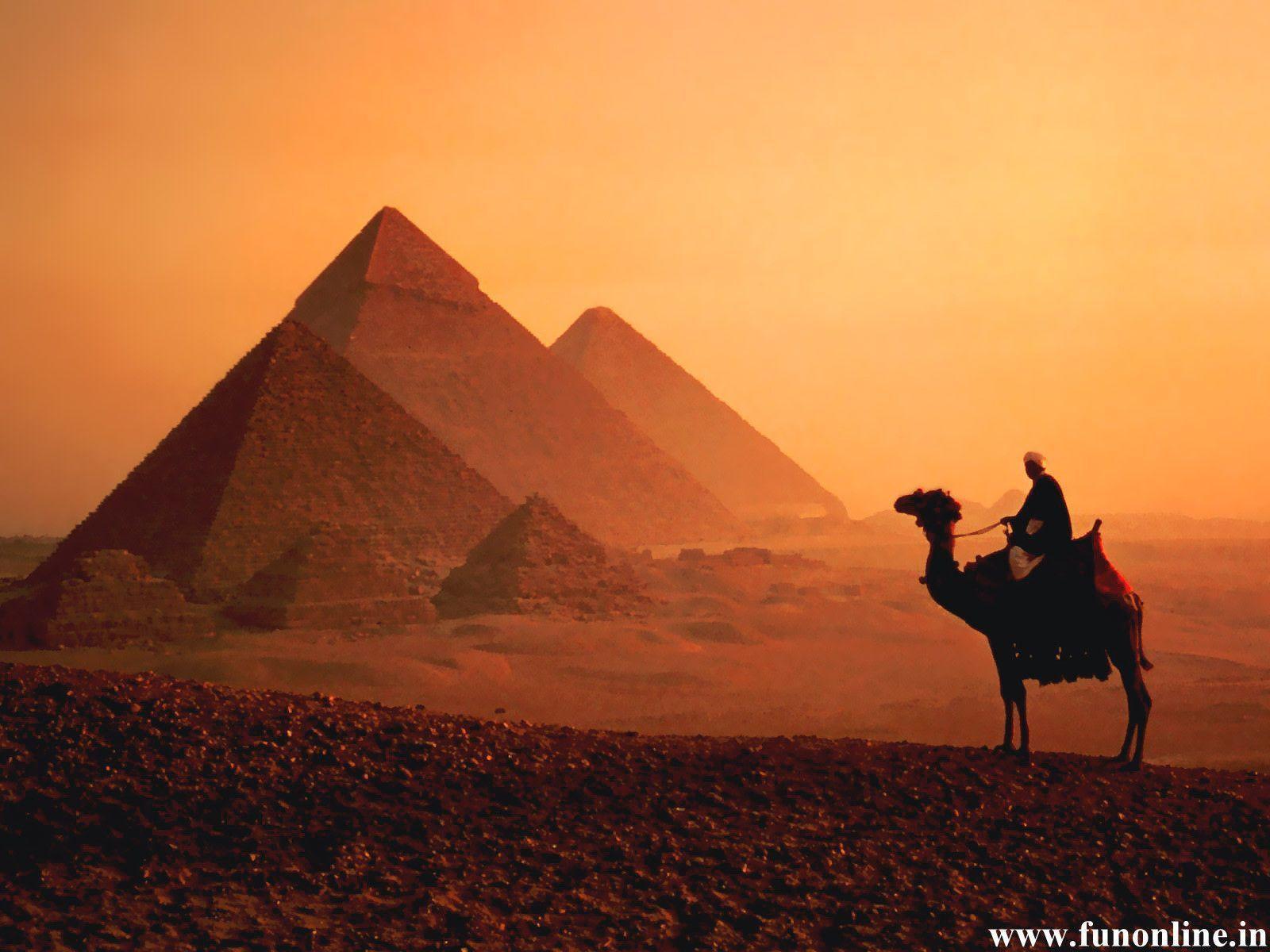 Camel Wallpapers Wallpaper Cave