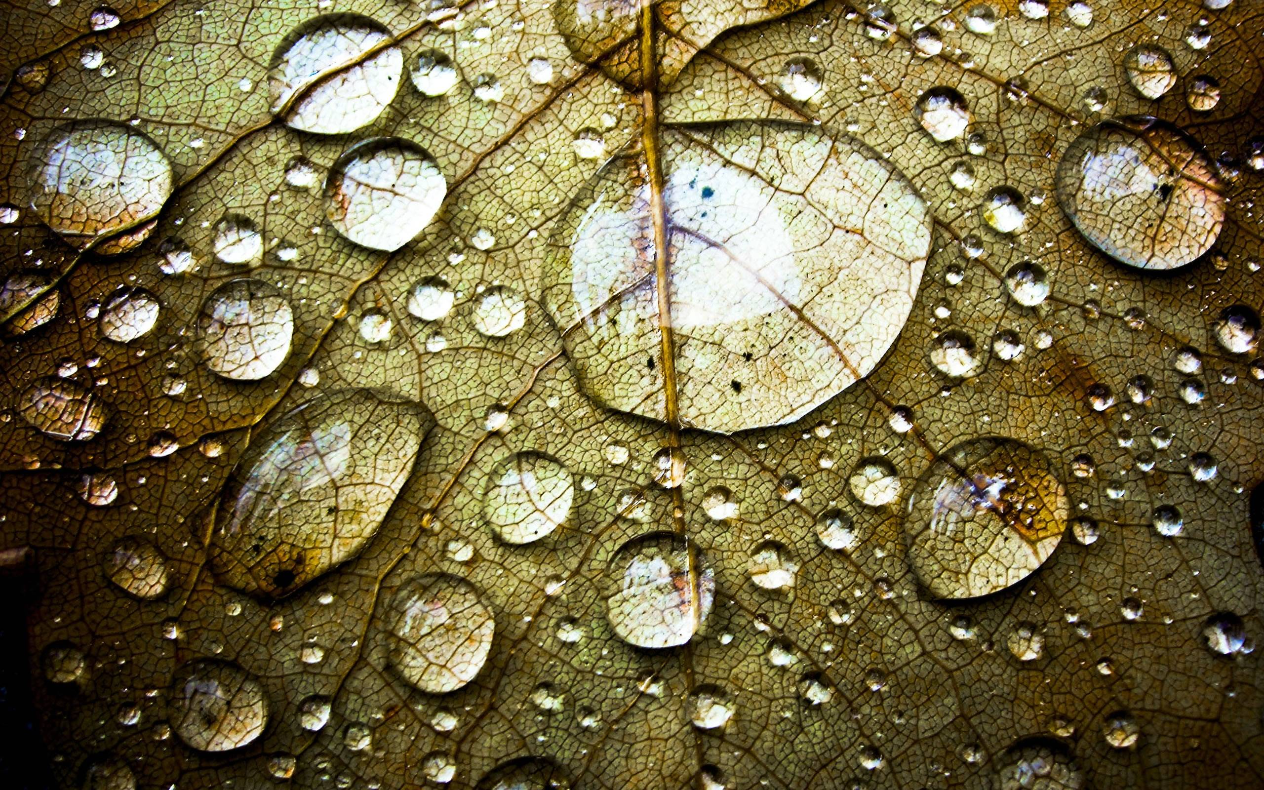 hd wallpapers water drops - photo #14