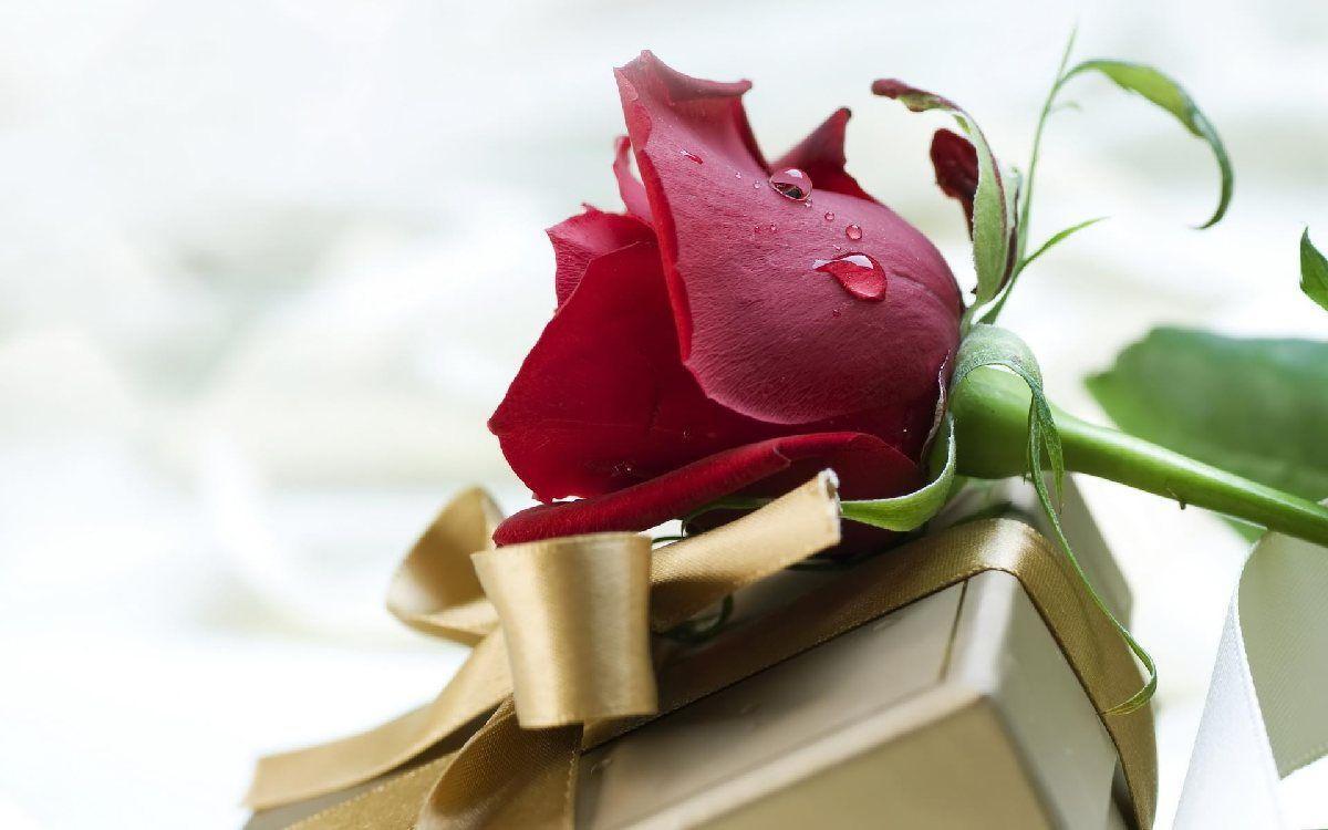Roses Free Wallpaper