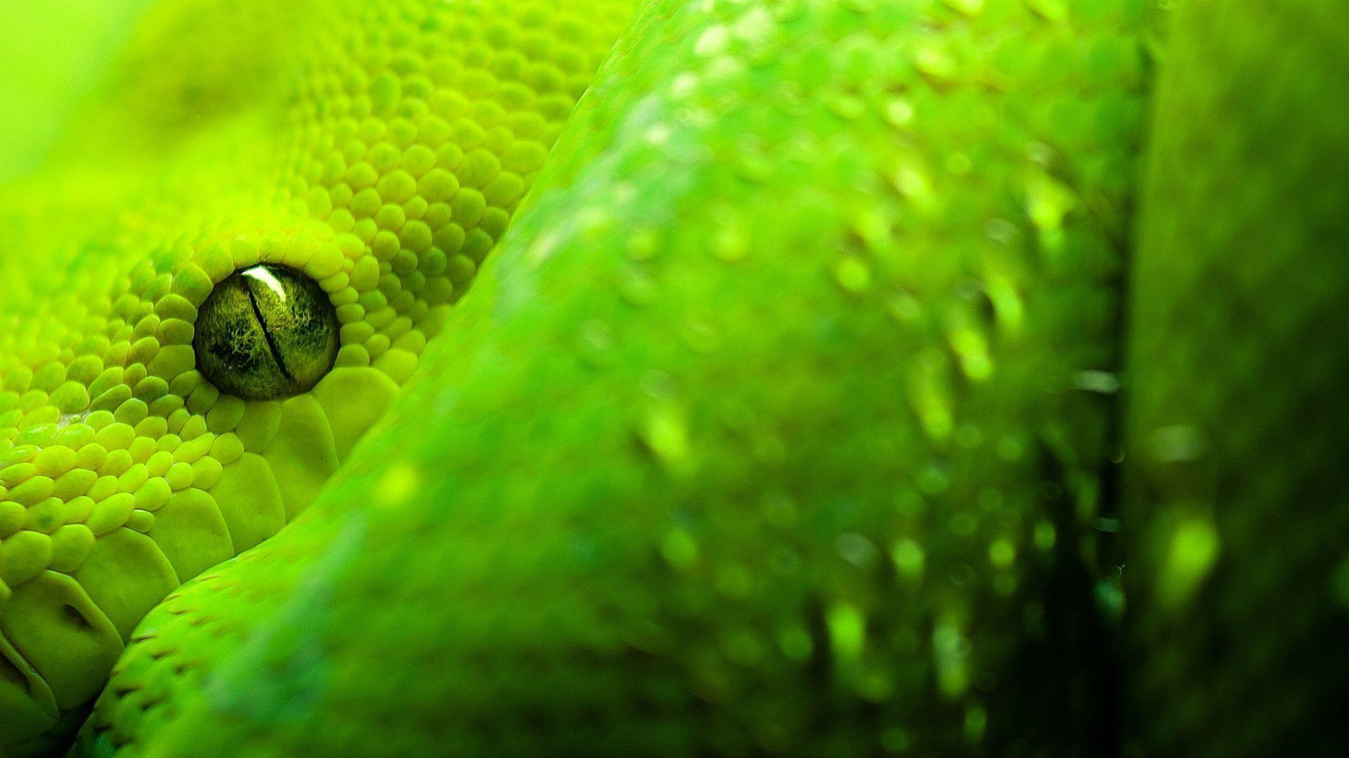 280 Snake Wallpapers | Snake Backgrounds Page 8