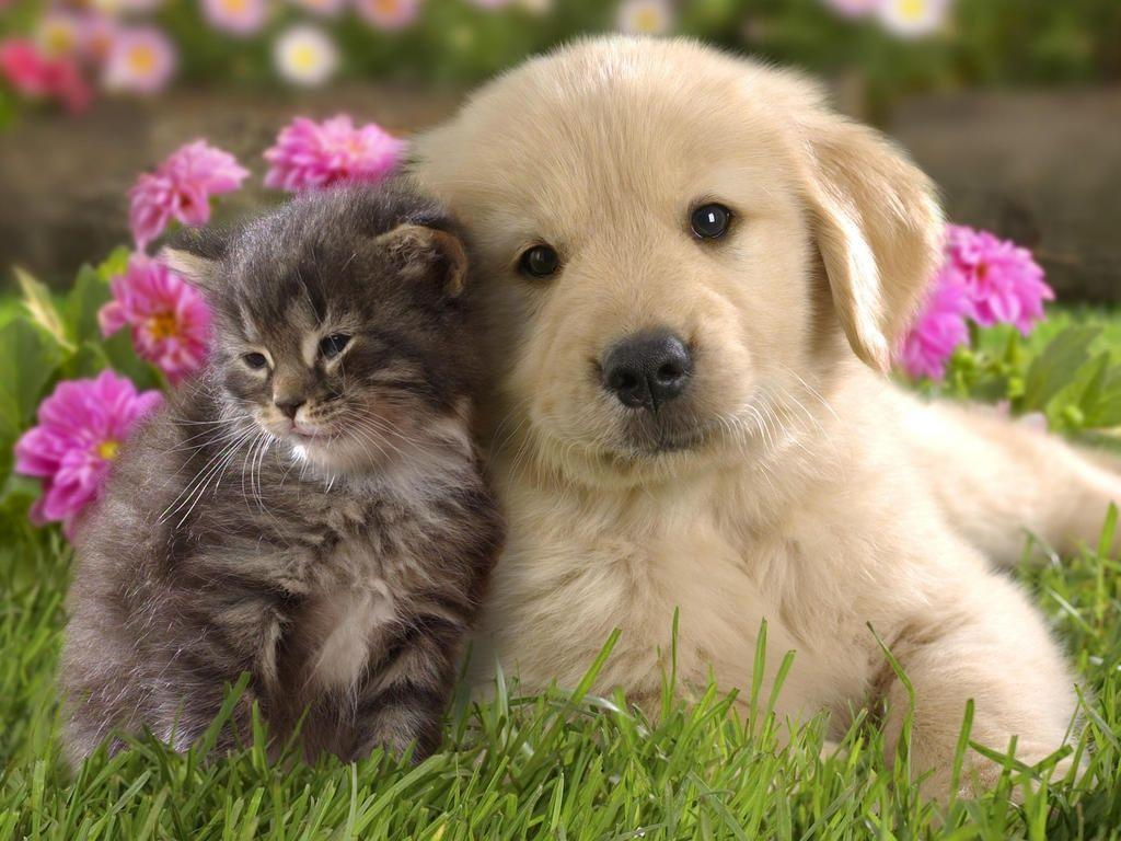 Cute Puppies Images Cute Puppies Pics for Desktop Handpicked