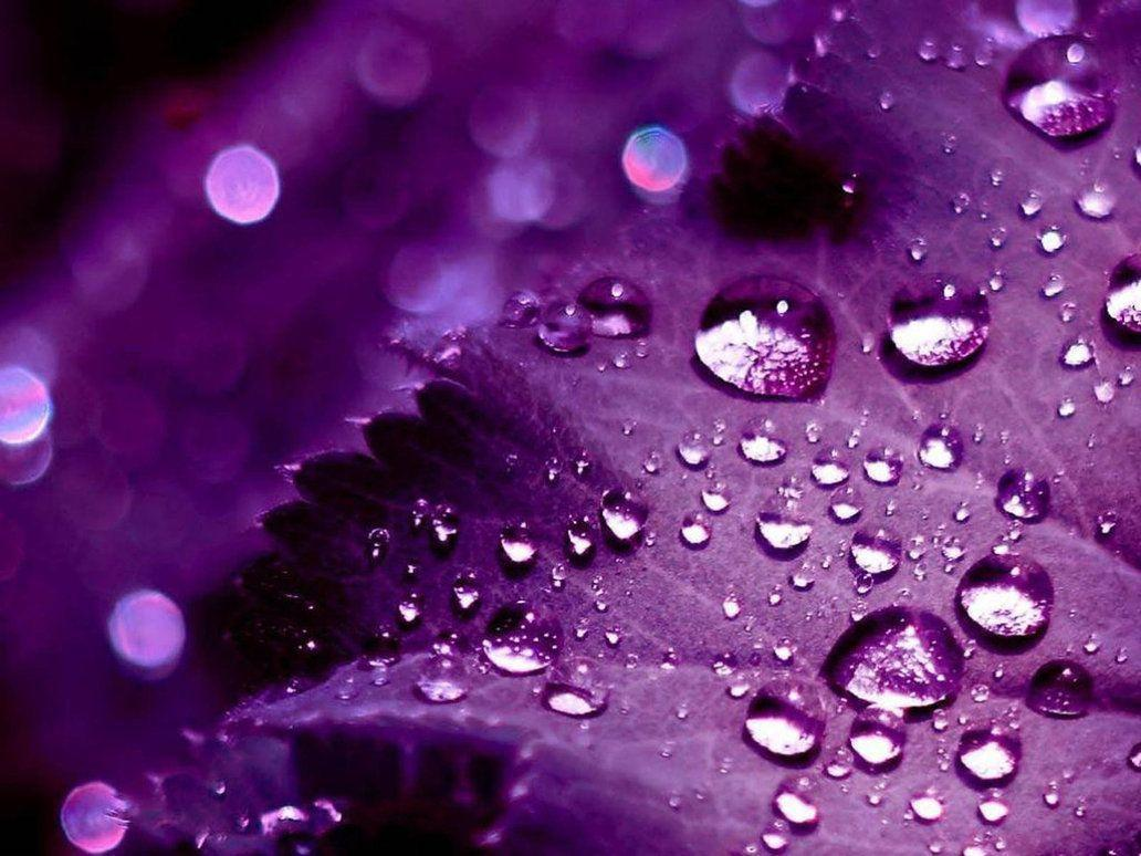 Wallpaper Nature Beauty Purple Hd Pictures 4 HD Wallpapers