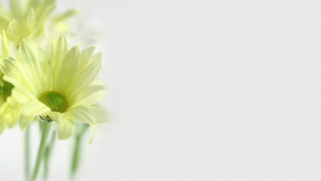 White Flower Wallpapers And Pictures 138 Items Page 1 Of 6