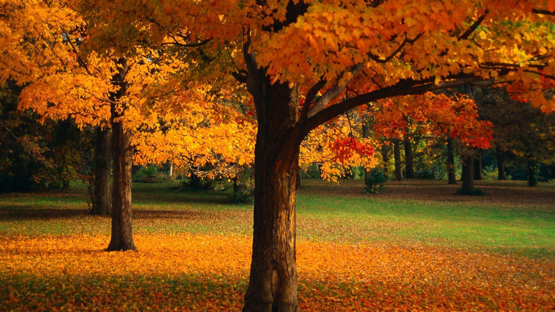 3d wallpaper trees - photo #22