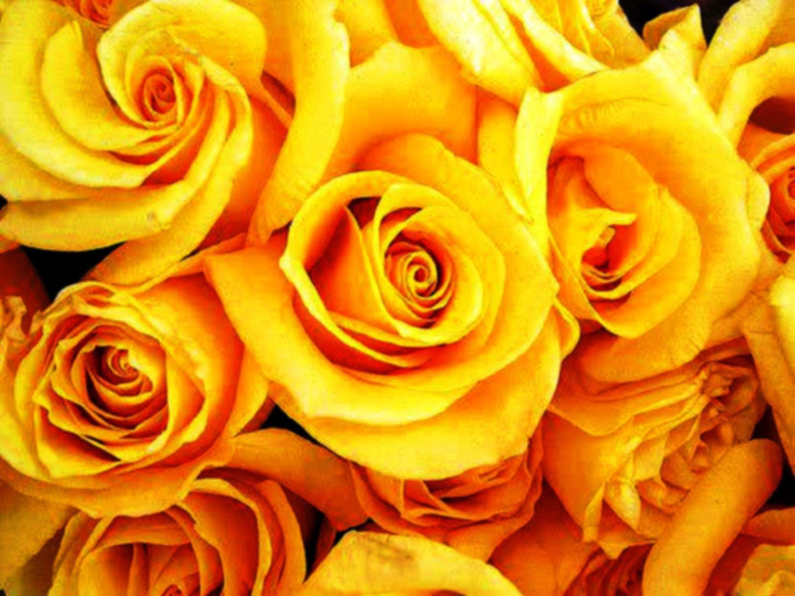 Yellow Roses Backgrounds - Wallpaper Cave