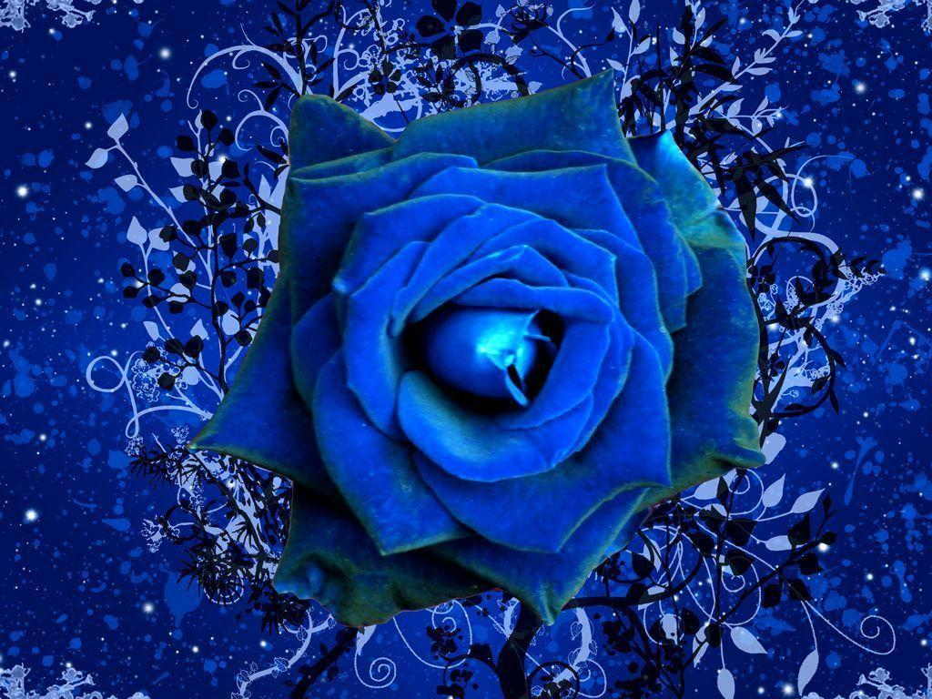 Images For Gt Dark Blue Roses Wallpaper | zone-wallpaper.com