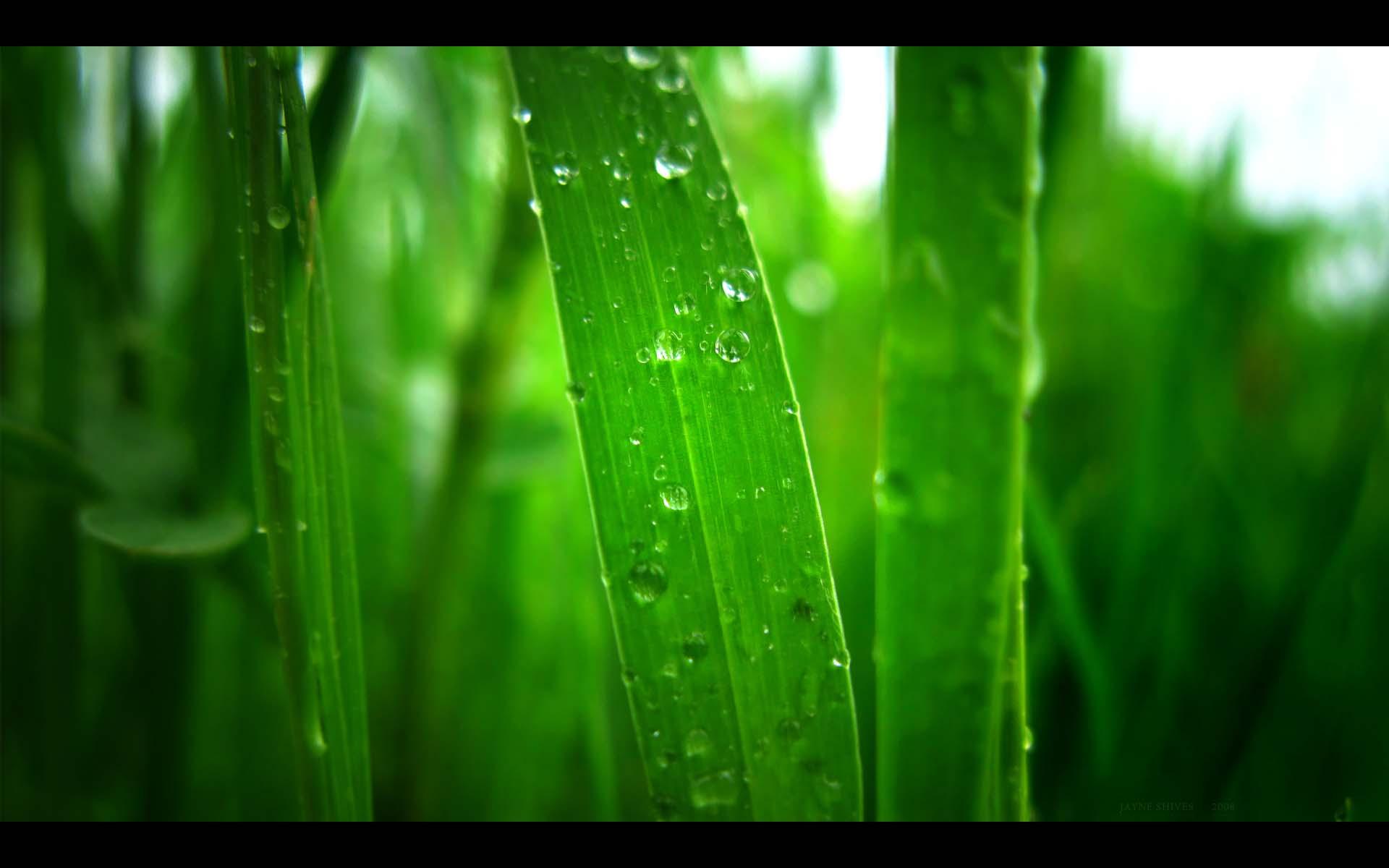 beautiful green grass wallpapers - photo #24