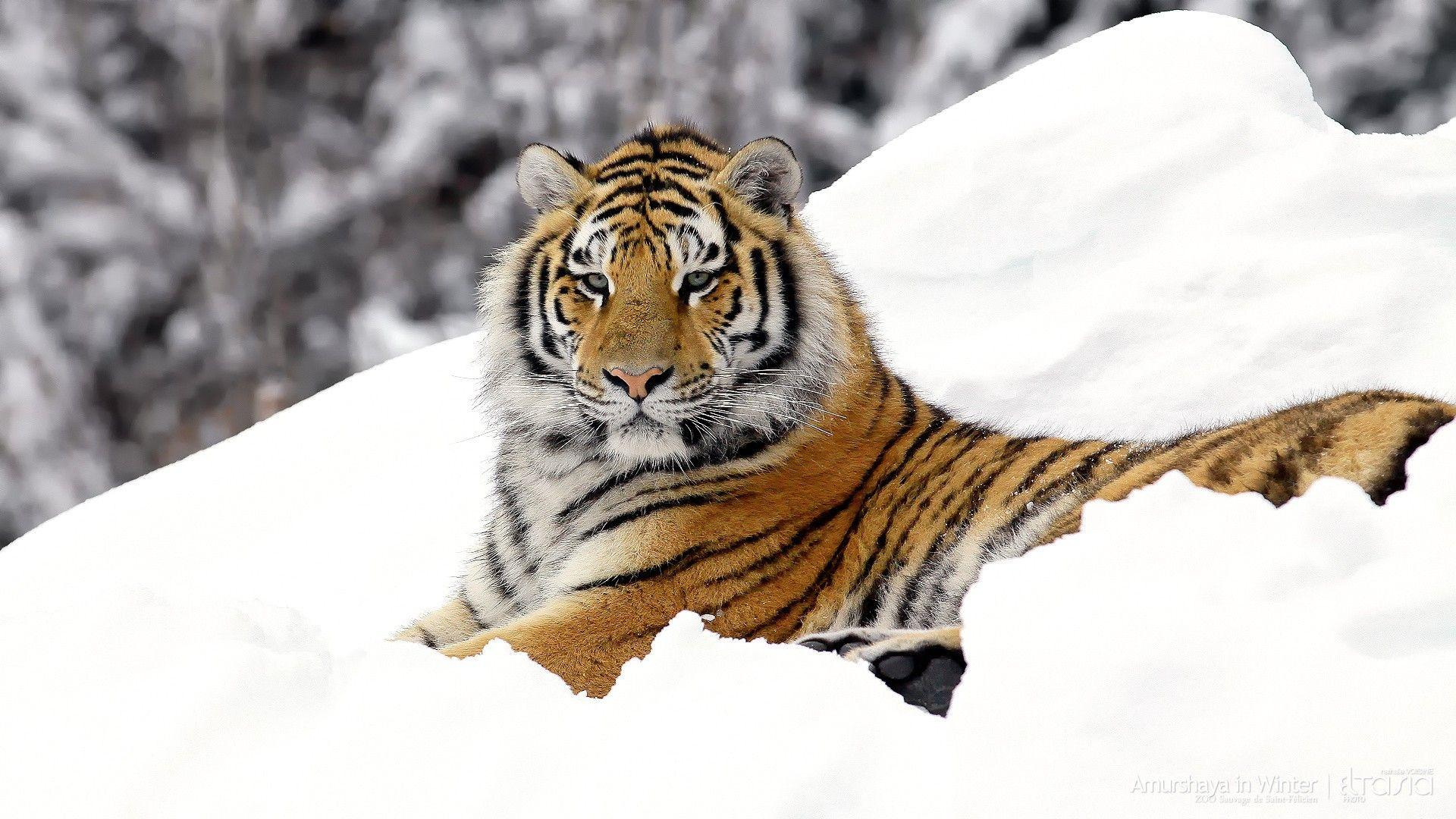 hd animal wallpapers wild - photo #31