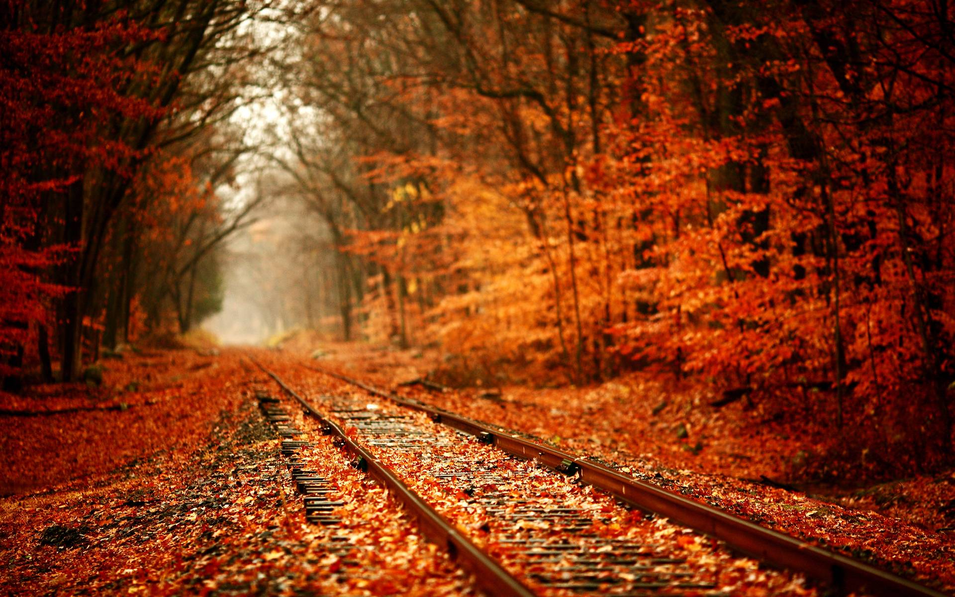 autumn leaves desktop wallpaper autumn leaves photos cool