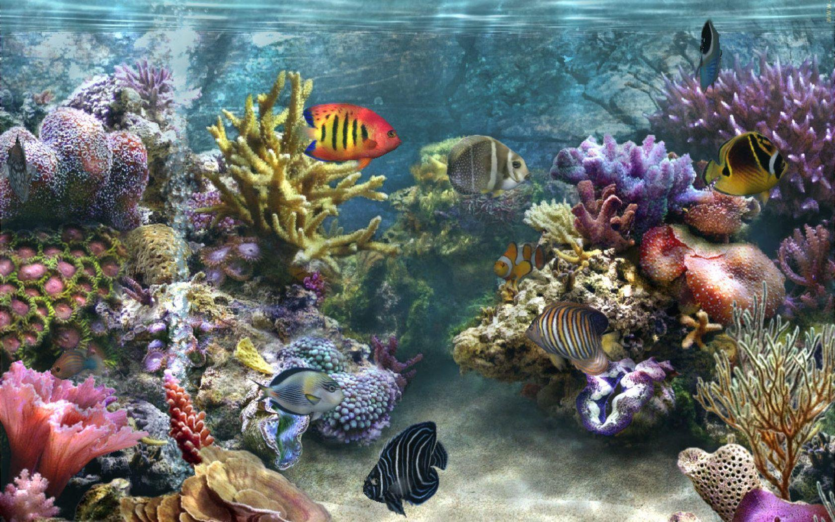 Coral reef backgrounds wallpaper cave - Sea coral wallpaper ...