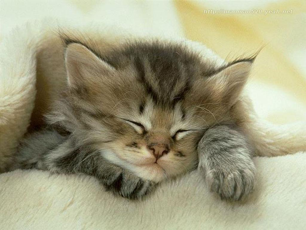 Cute Kittens Wallpapers - Animal Wallpapers (2399) ilikewalls.