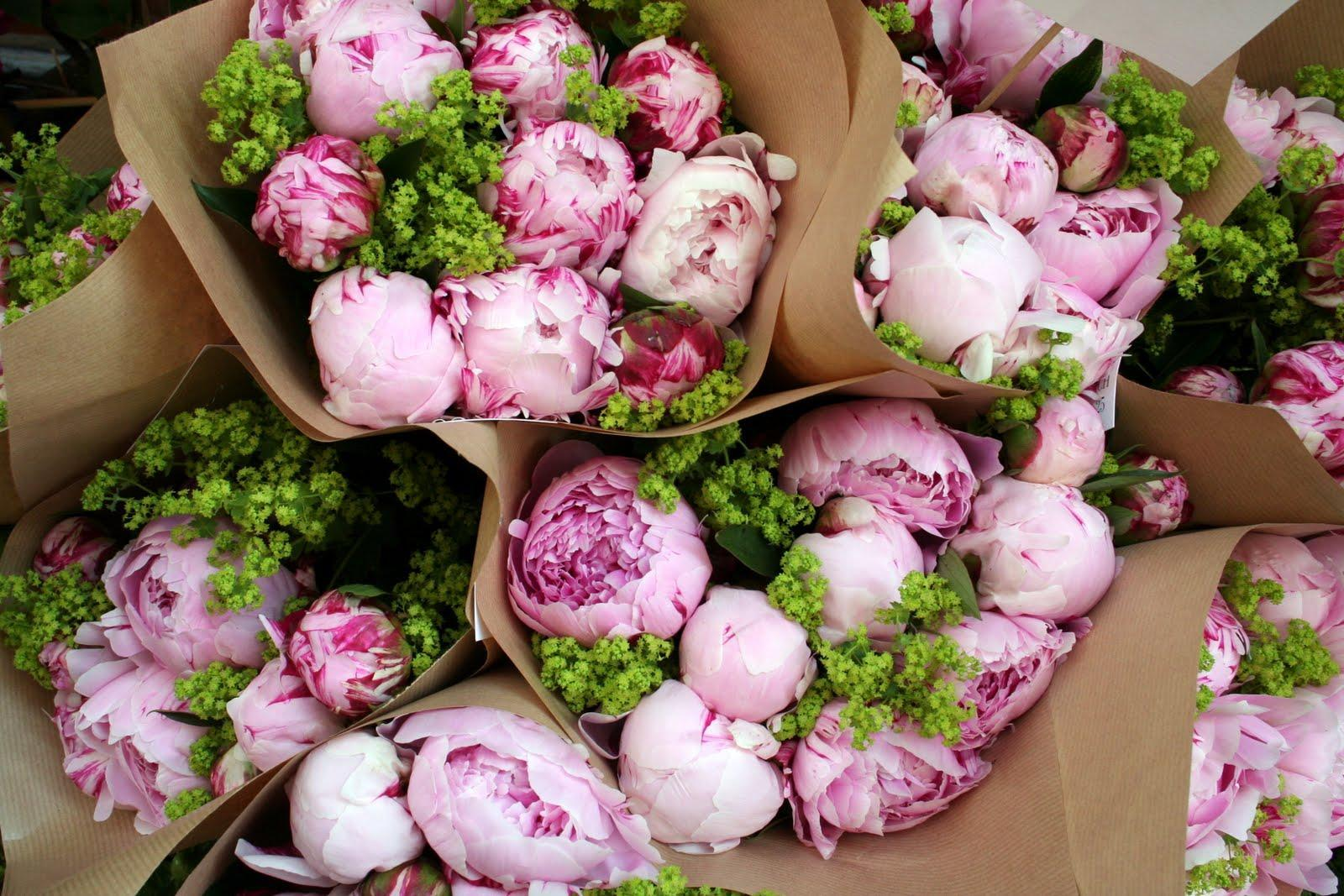 Peony Wallpapers Wallpaper Cave
