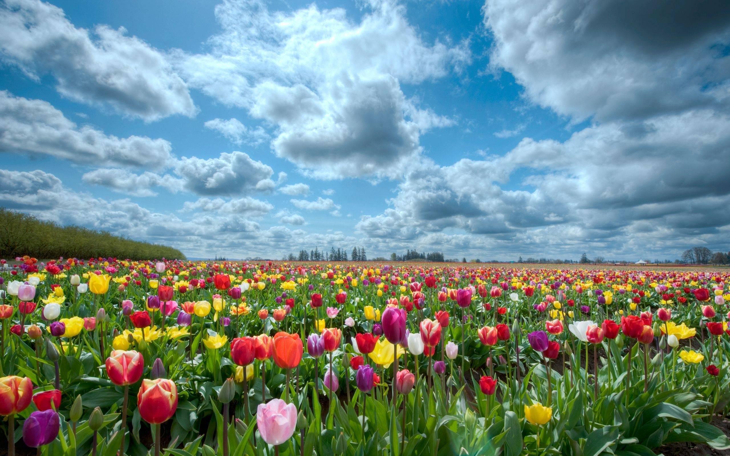 Flower garden pictures - Flowers For Flower Garden Wallpaper Background
