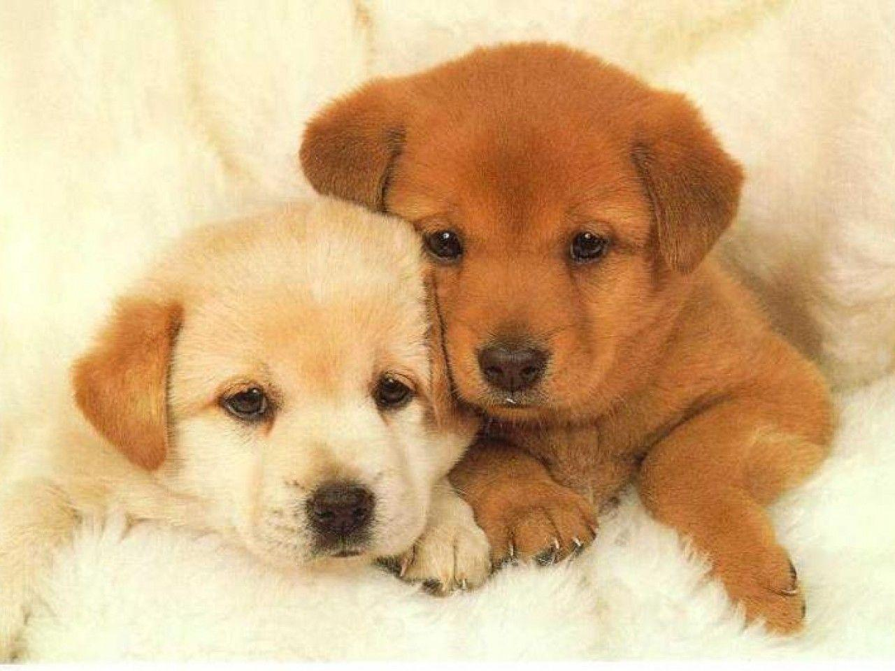 Puppies Wallpaper - Animal Backgrounds