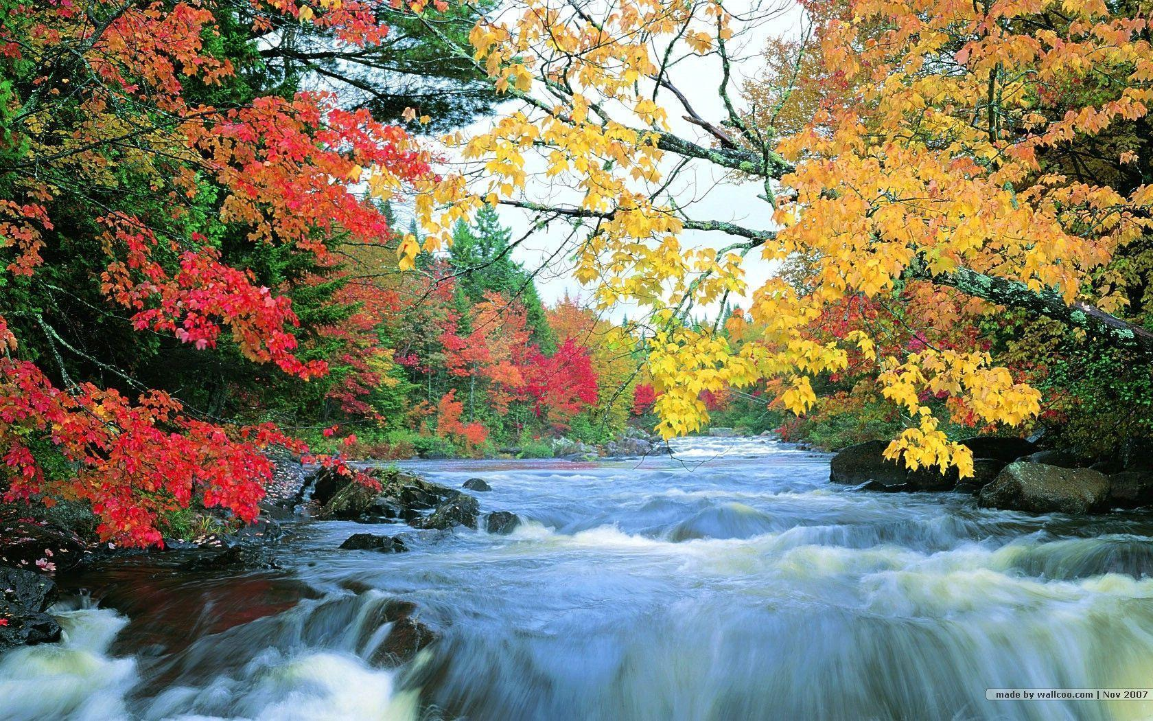 amazing fall foliage wallpapers - photo #25