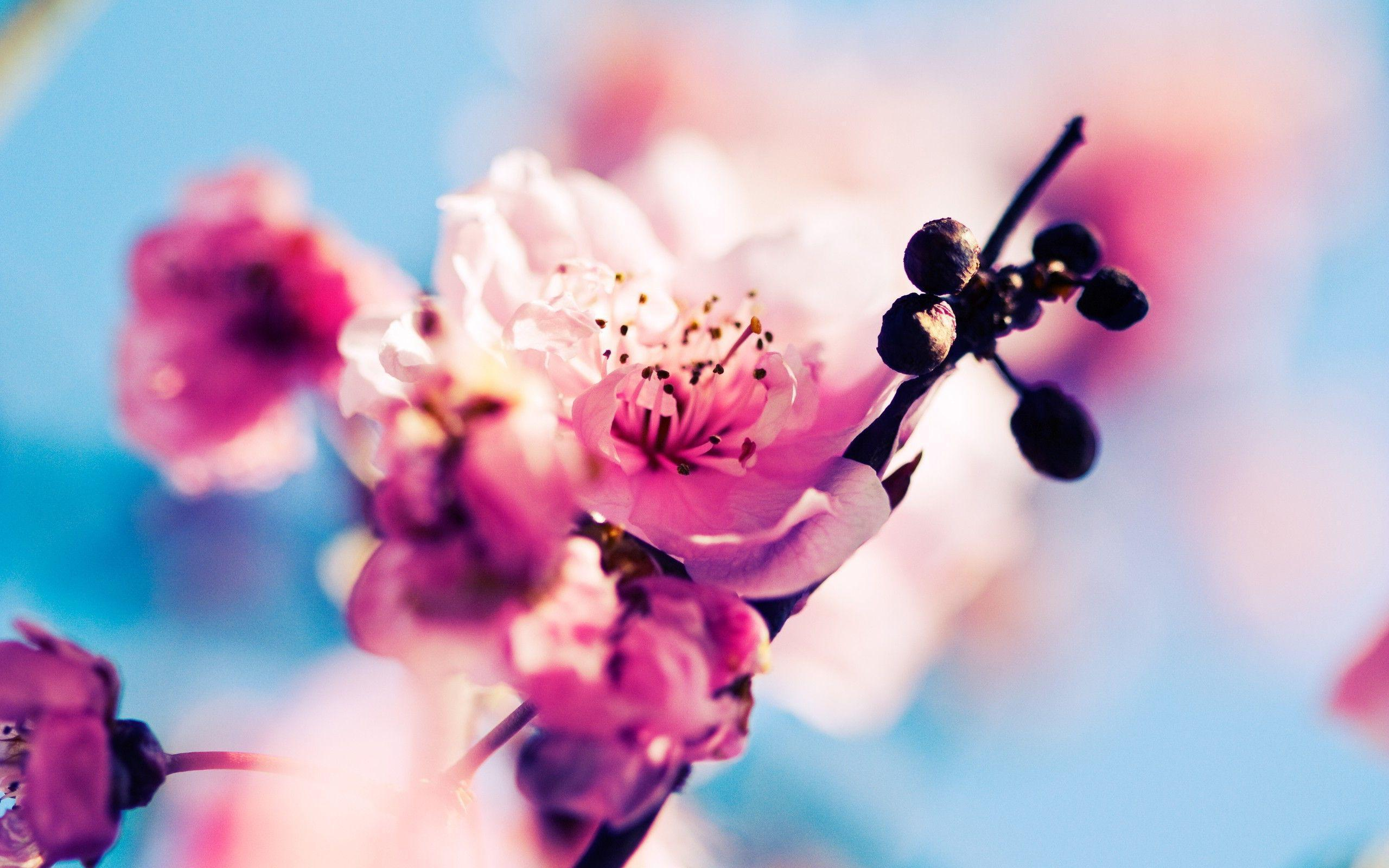 spring wallpaper | spring wallpaper - Part 4
