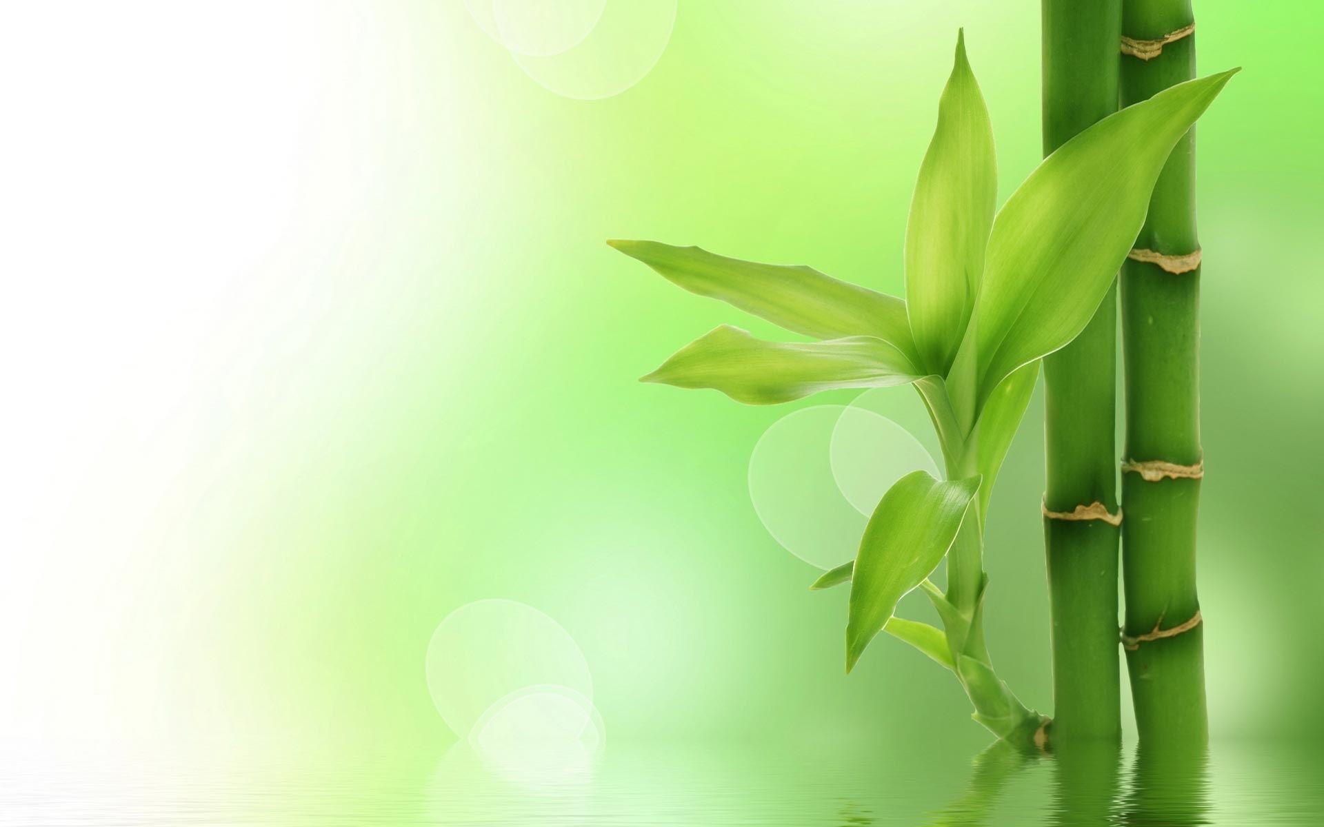 bamboo background nineteen photo - photo #46
