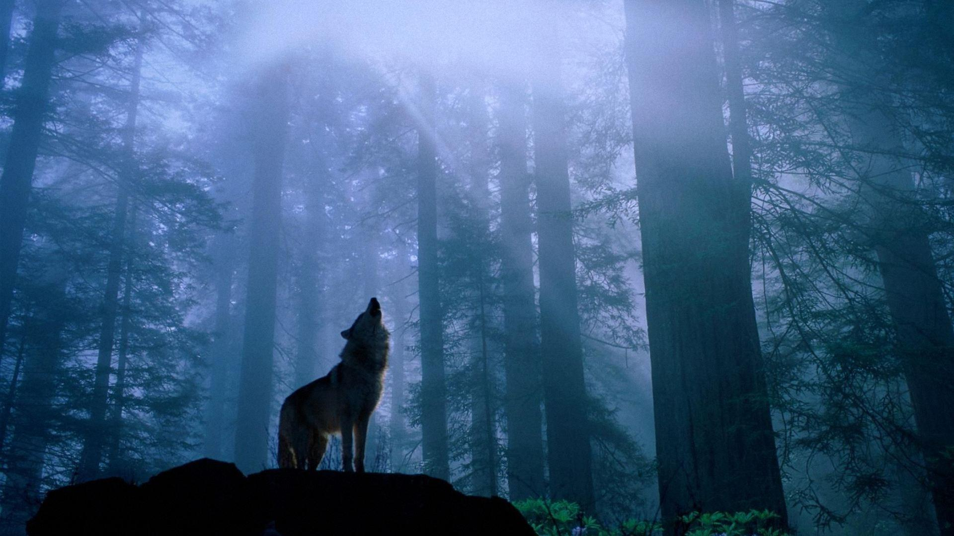 Anime Wolf Wallpaper - Wallpapers Browse