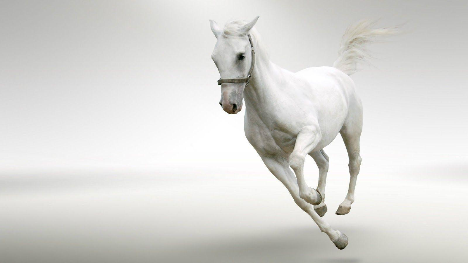 Running White Horse In Snow wallpapers