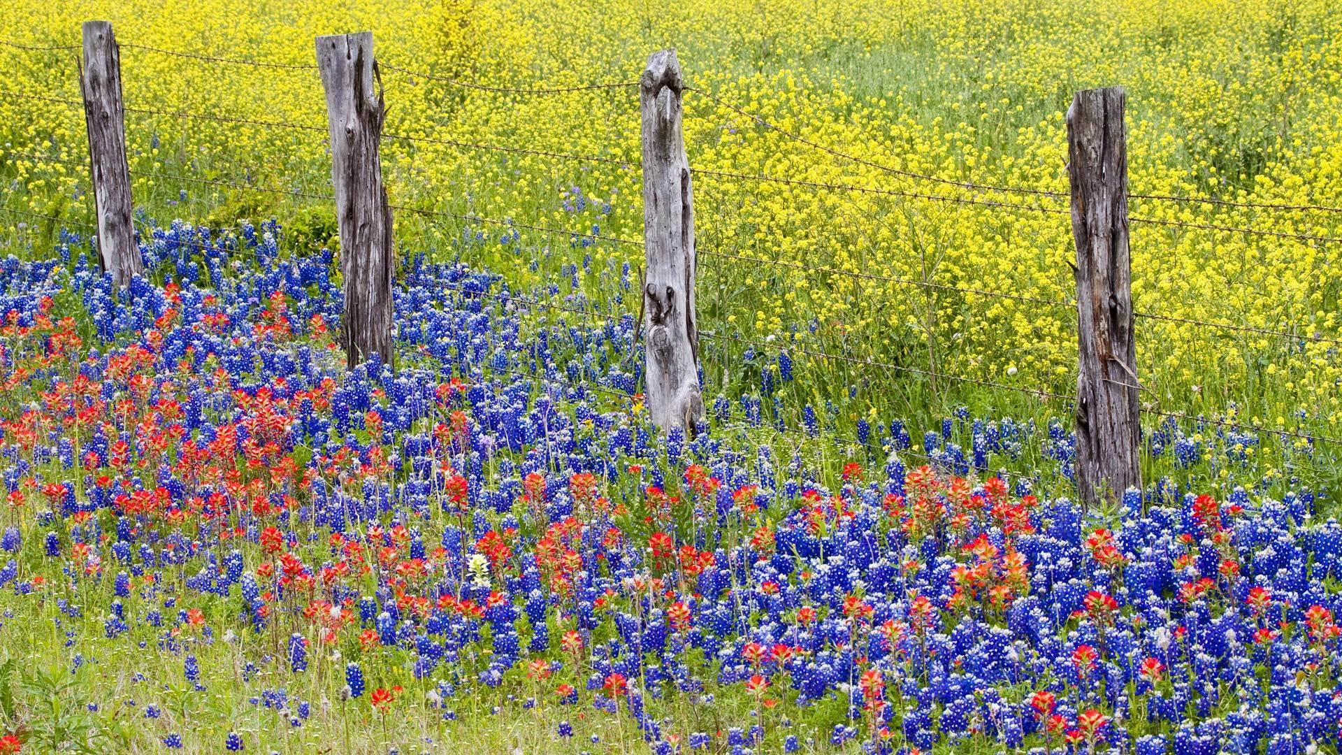 images for bluebonnets wallpaper