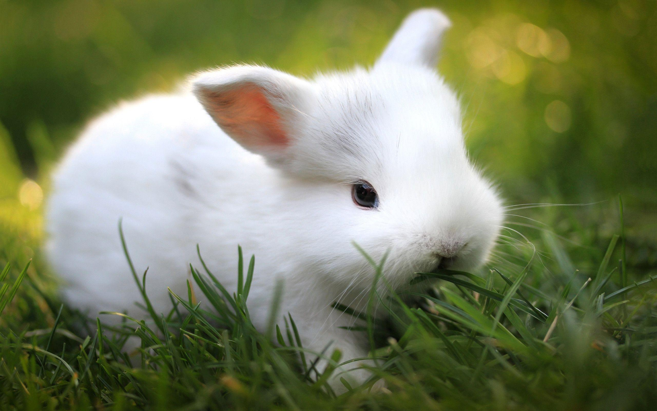 Cute White Bunny Wallpaper 39765 In Animals