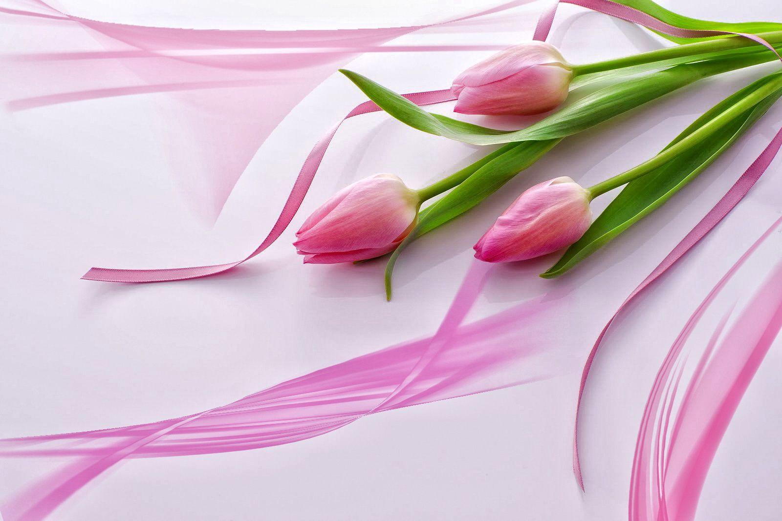 Flowers For > Beautiful Pink Tulip Wallpaper