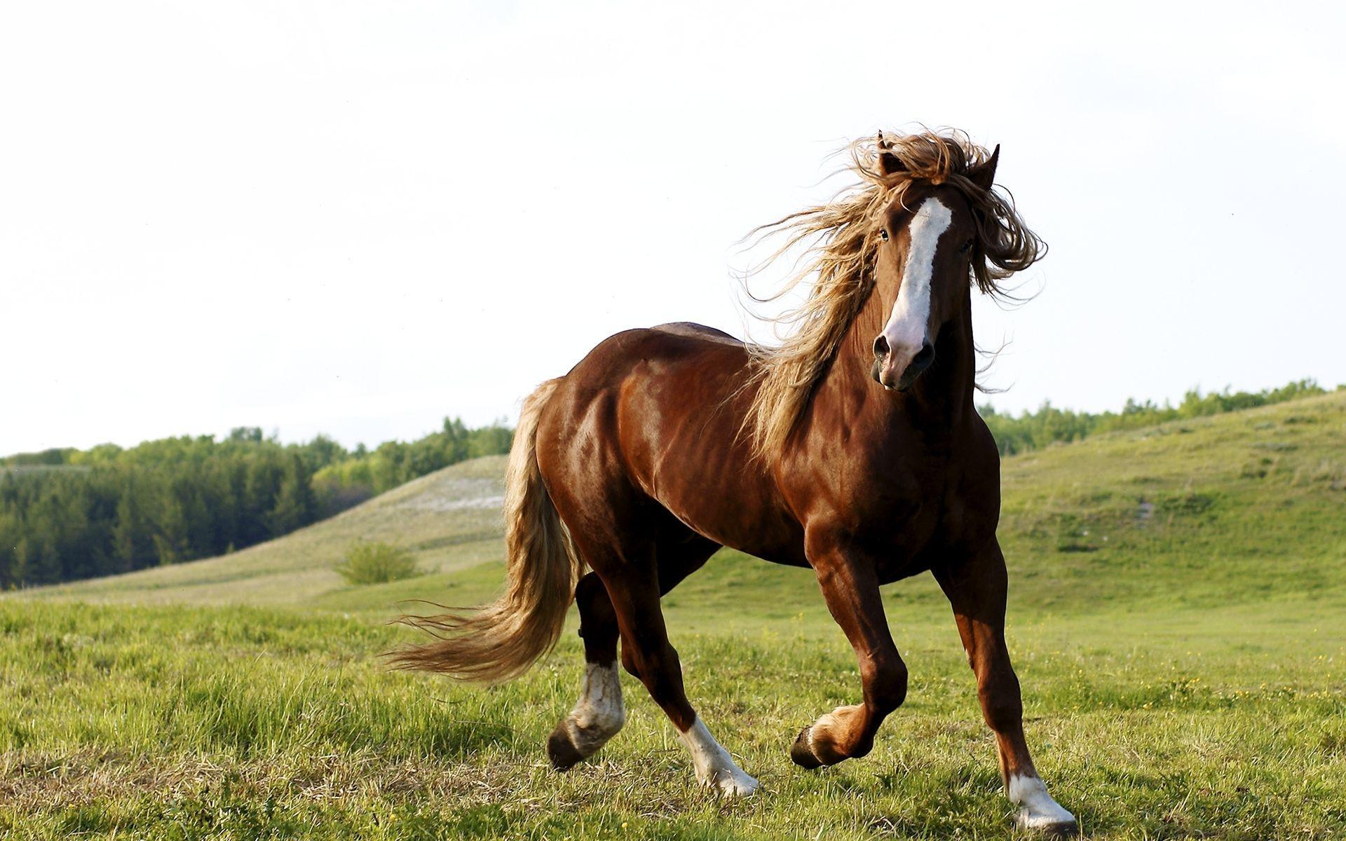 Horse Wallpaper Widescreen #14200 - Ehiyo.