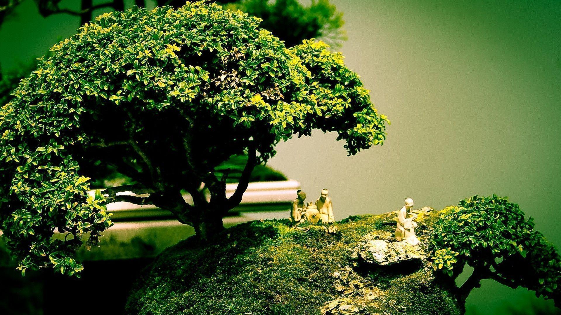 bonsai tree wallpapers wallpaper cave