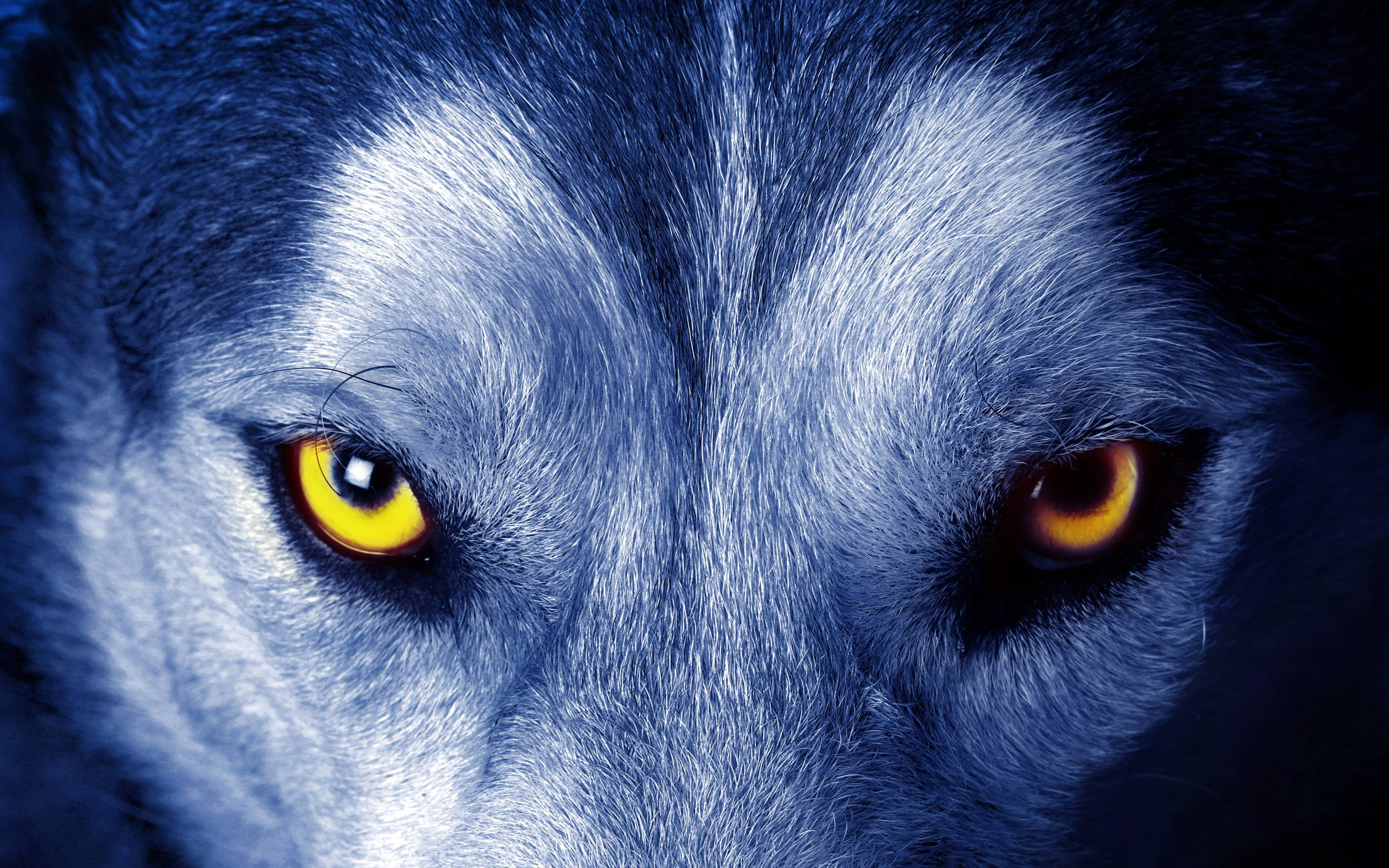 Wallpapers of wolf wallpaper cave wolf eyes wallpaper free hd desktop backgrounds voltagebd Gallery