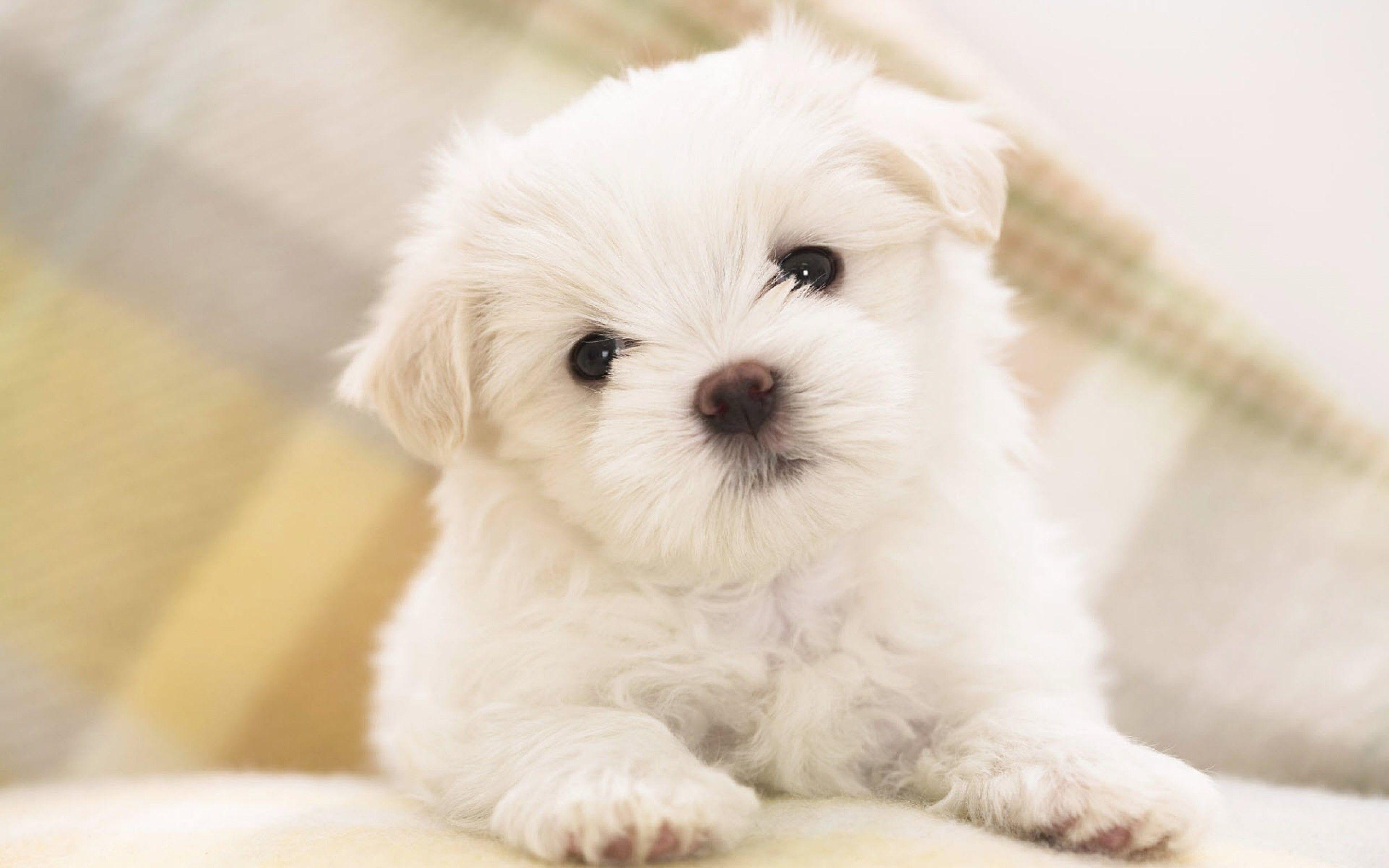 Puppy Wallpapers Wallpaper Cave