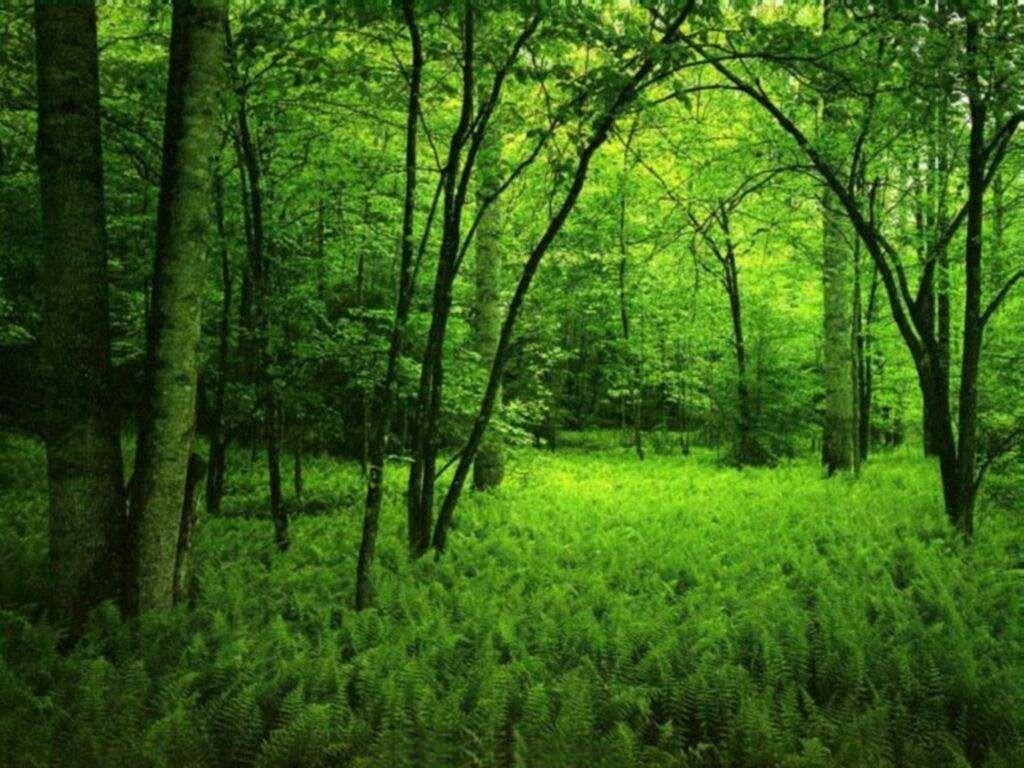 Nature Forest Wallpapers