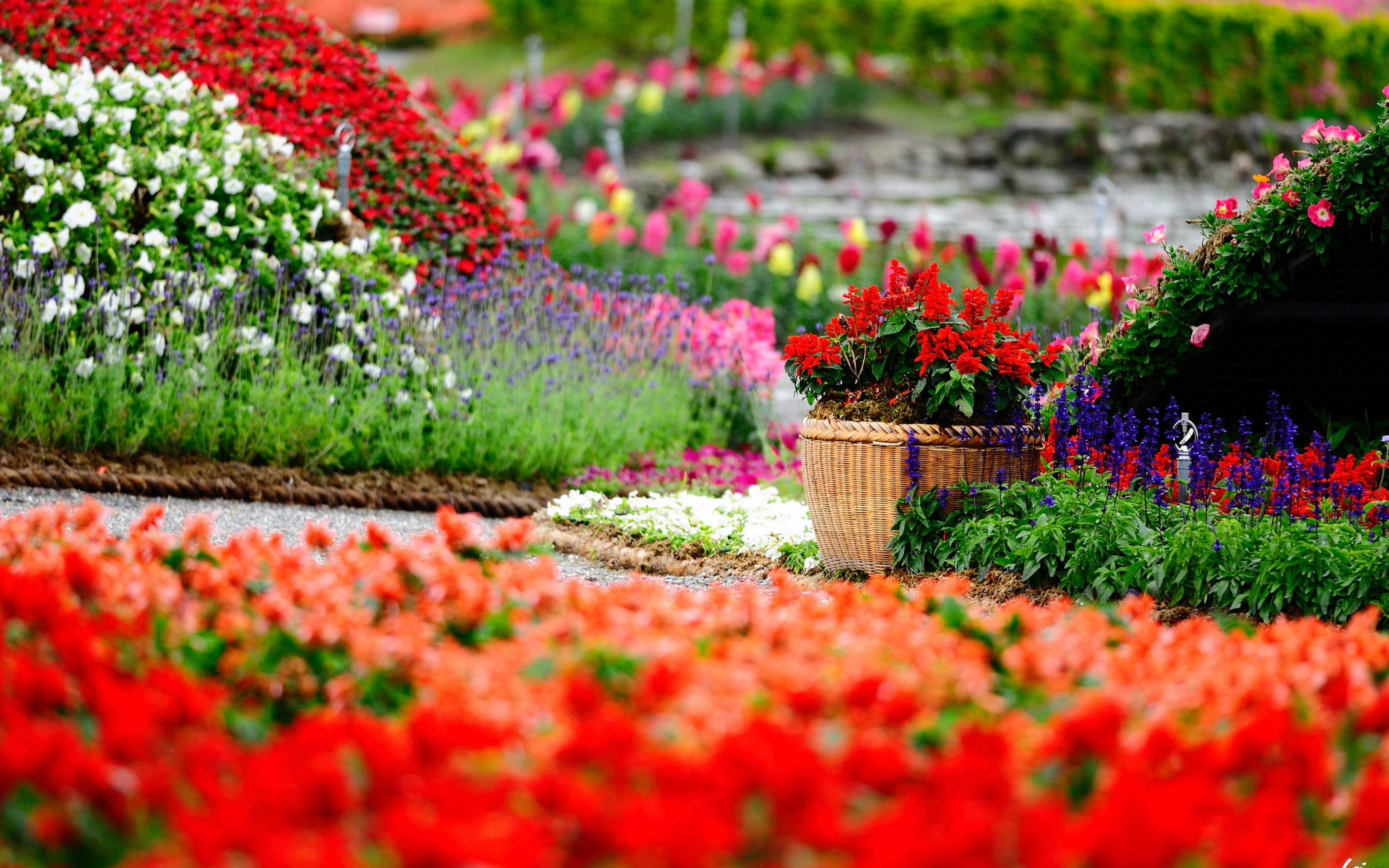 Flower garden backgrounds wallpaper cave Beautiful plants for home