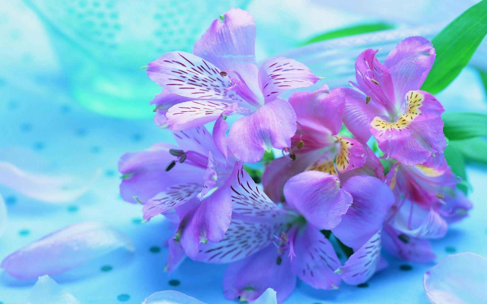 Pretty Flowers Wallpapers Wallpaper Cave