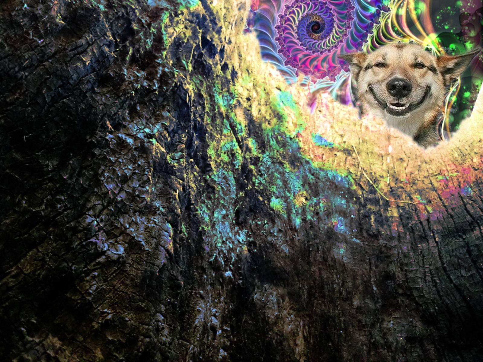 stoner wallpapers wallpaper cave