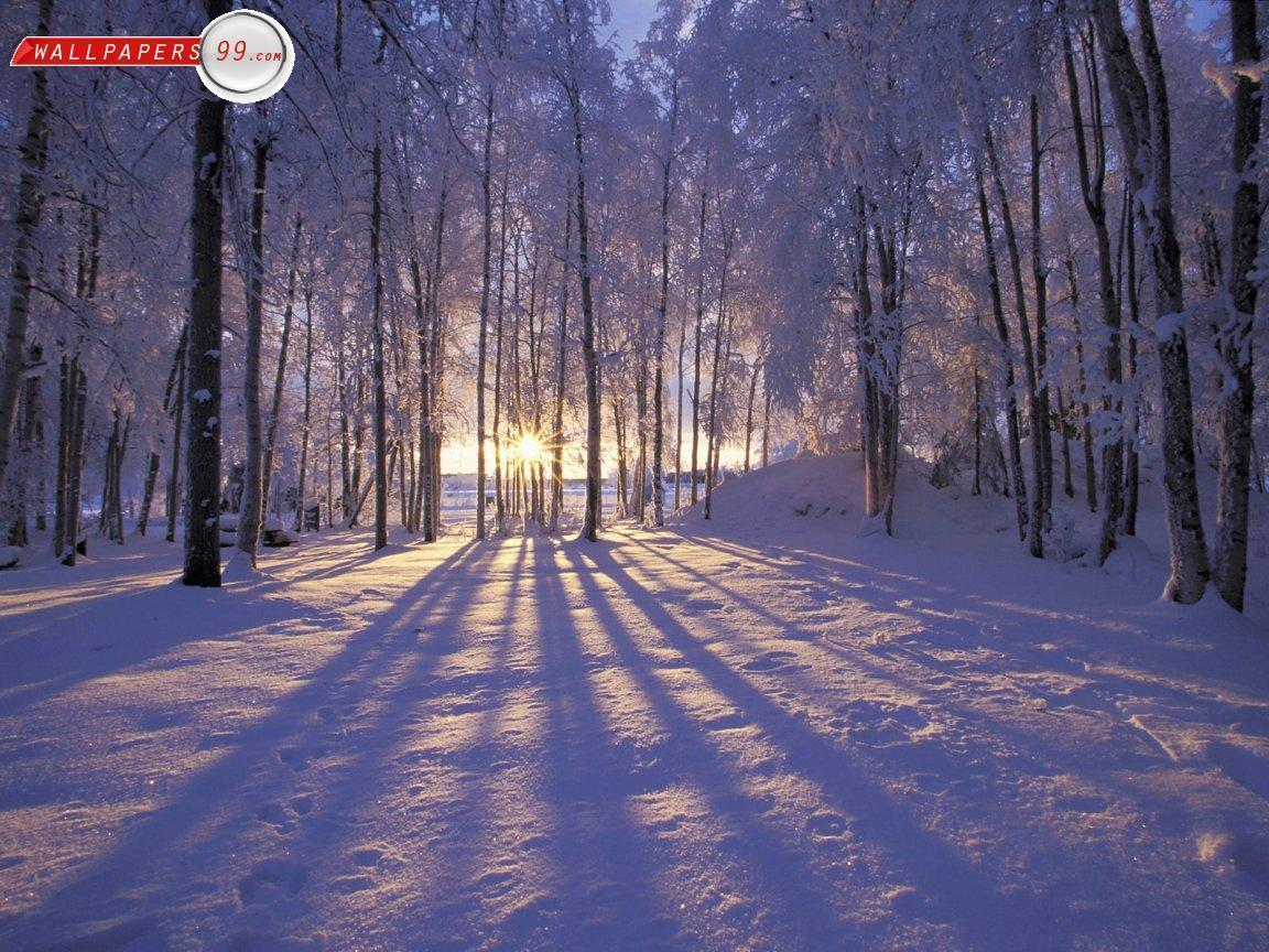 Winter Scenes Wallpapers Free