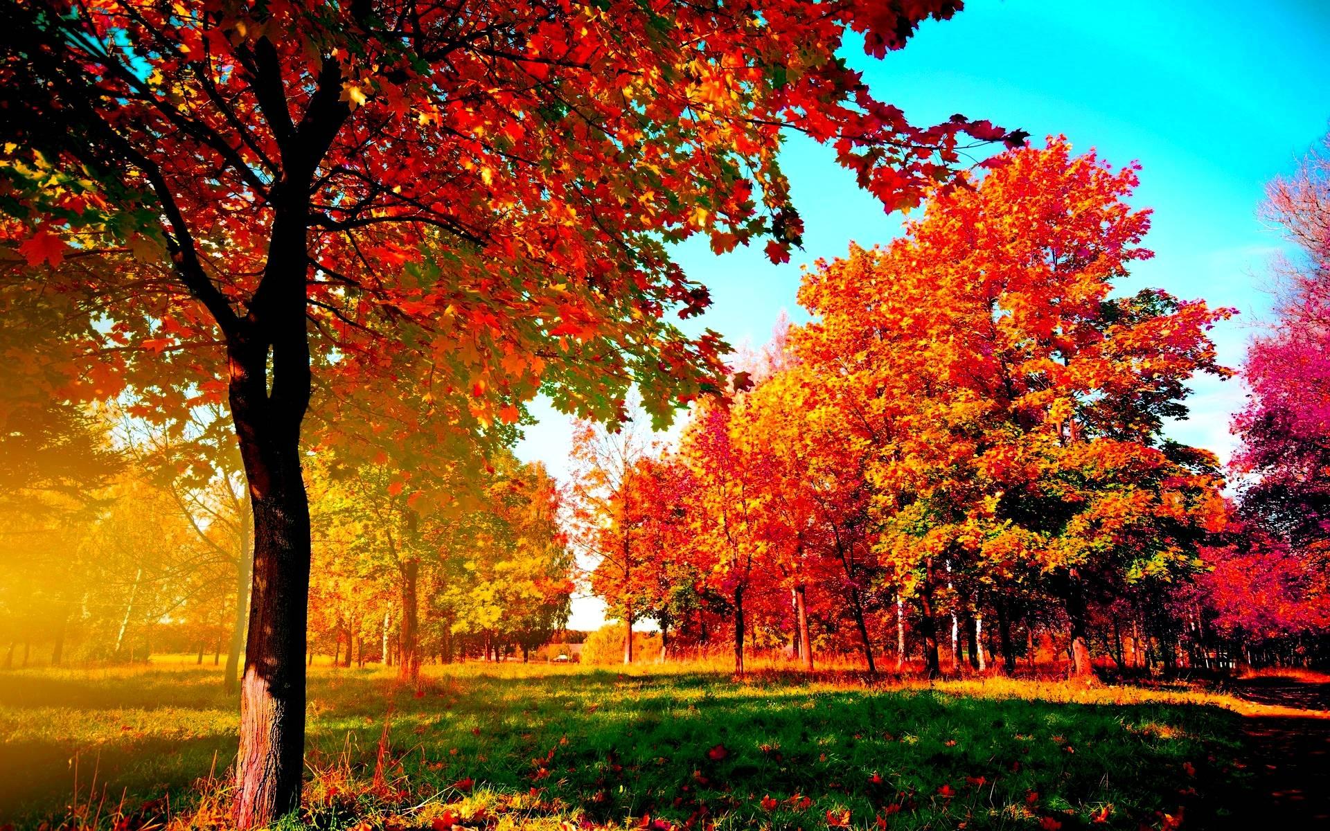 Фото обоев на рабочий стол осень