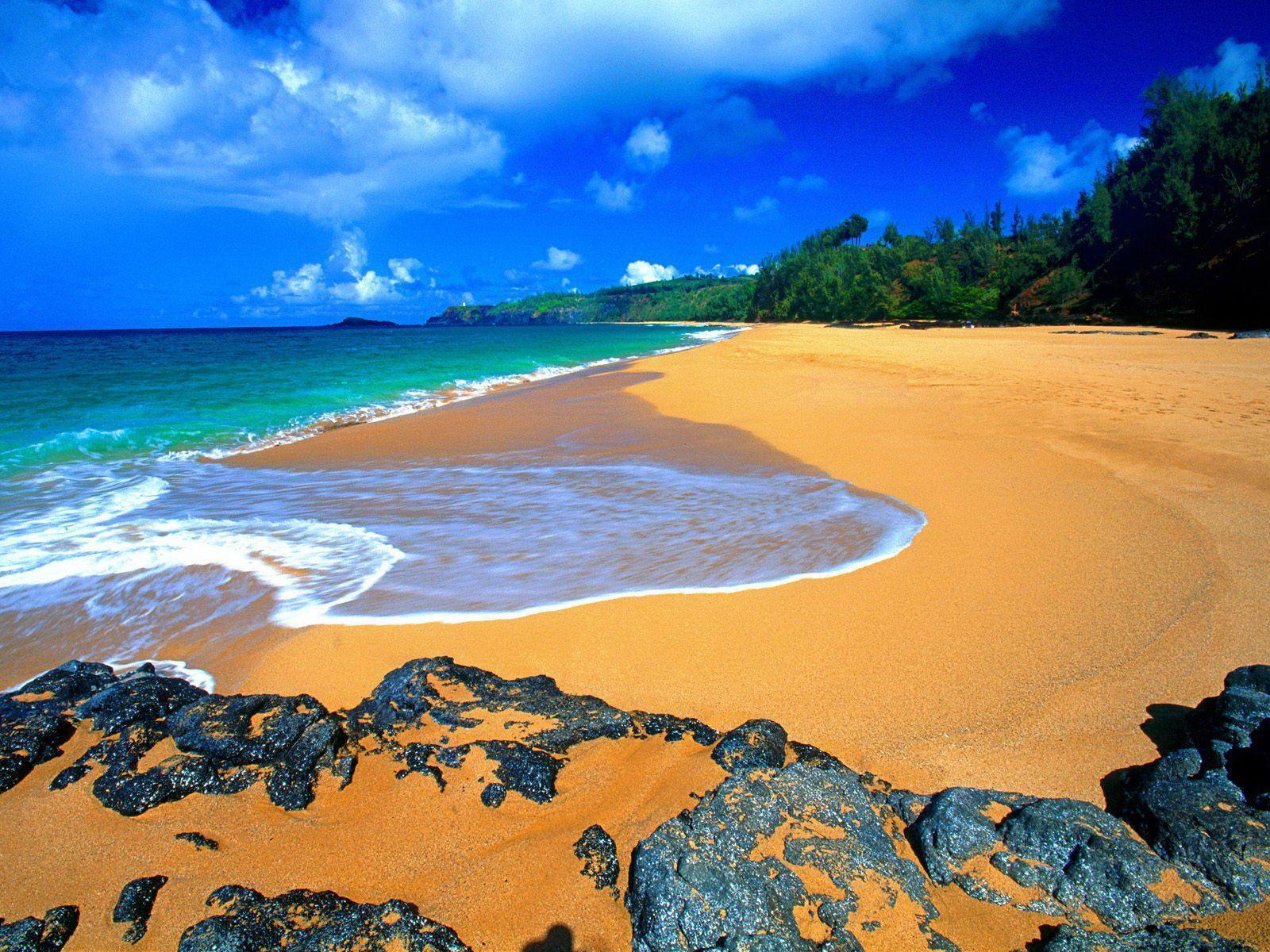 Dragon lore wallpaper wallpapersafari - Free Hawaii Screensavers Wallpaper