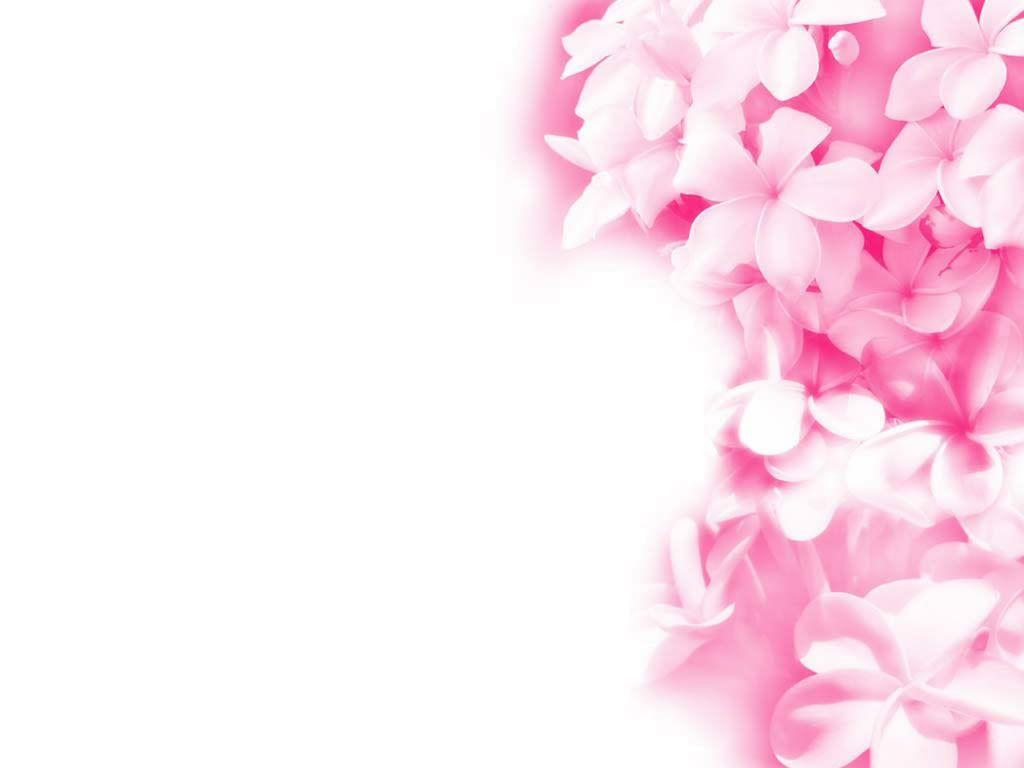 wallpaper pink flowered flower - photo #28