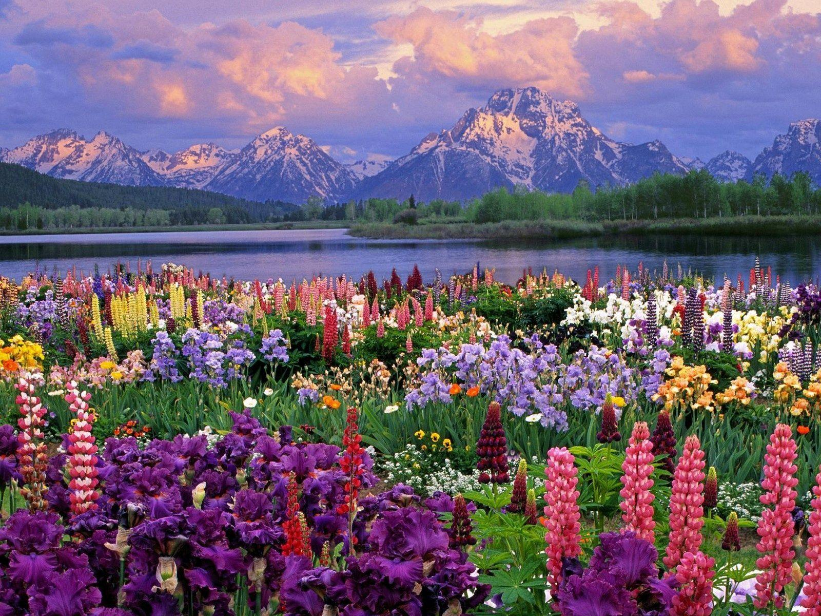 Beautiful Nature Spring Hd Widescreen 11 HD Wallpapers
